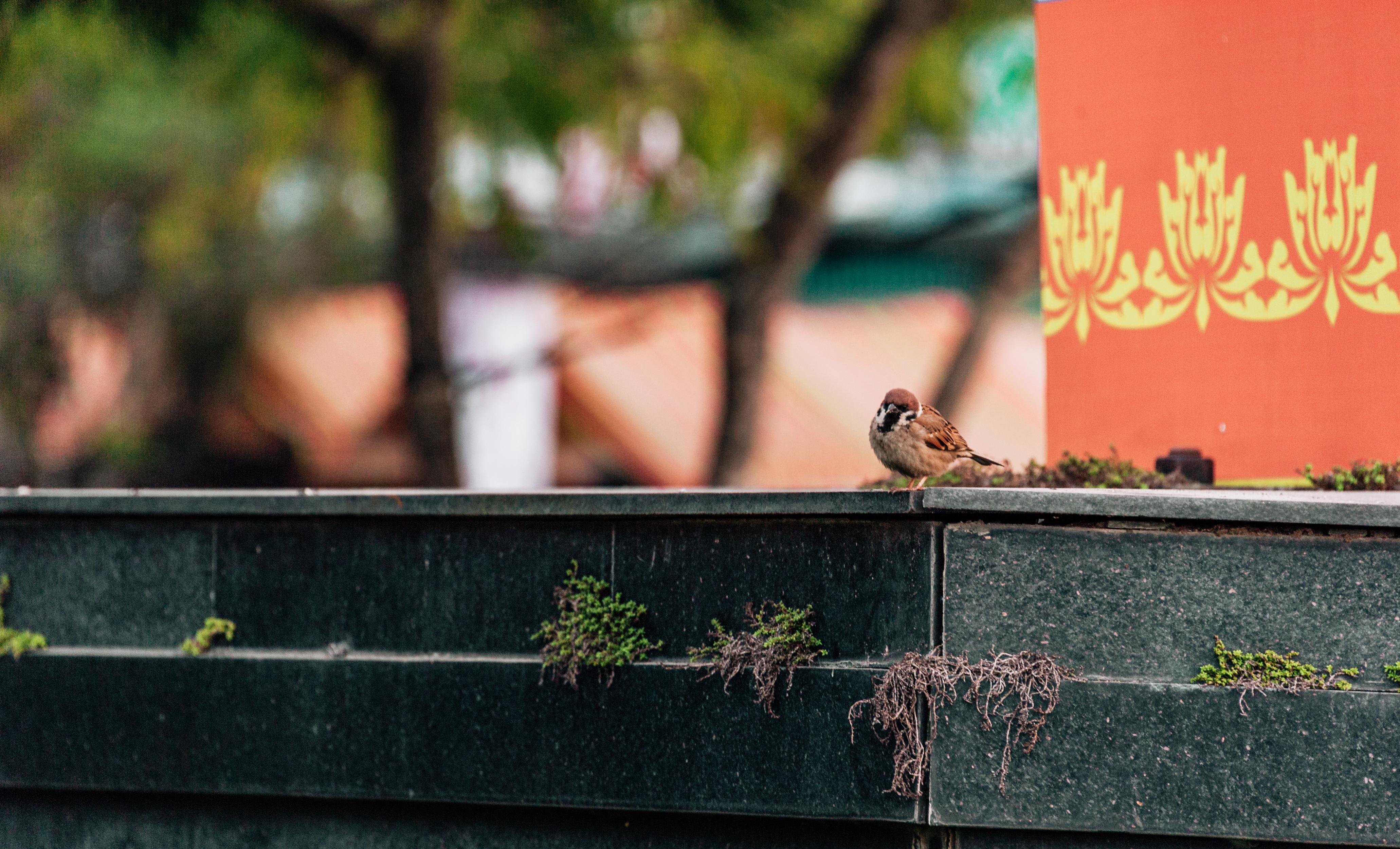 Pekné dlhé vtáky