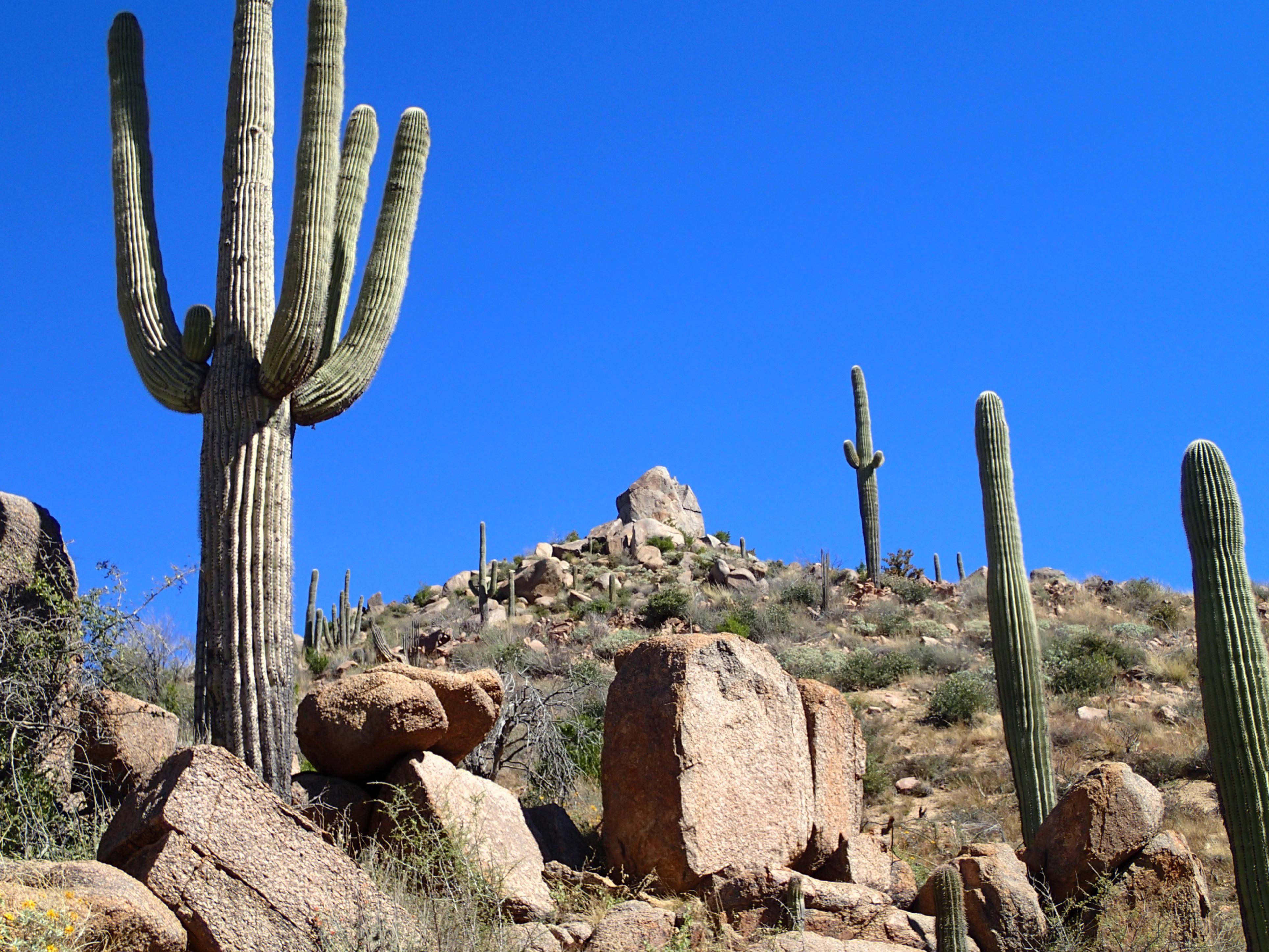 Fotos gratis paisaje rock cactus desierto flor for Fotos de cactus