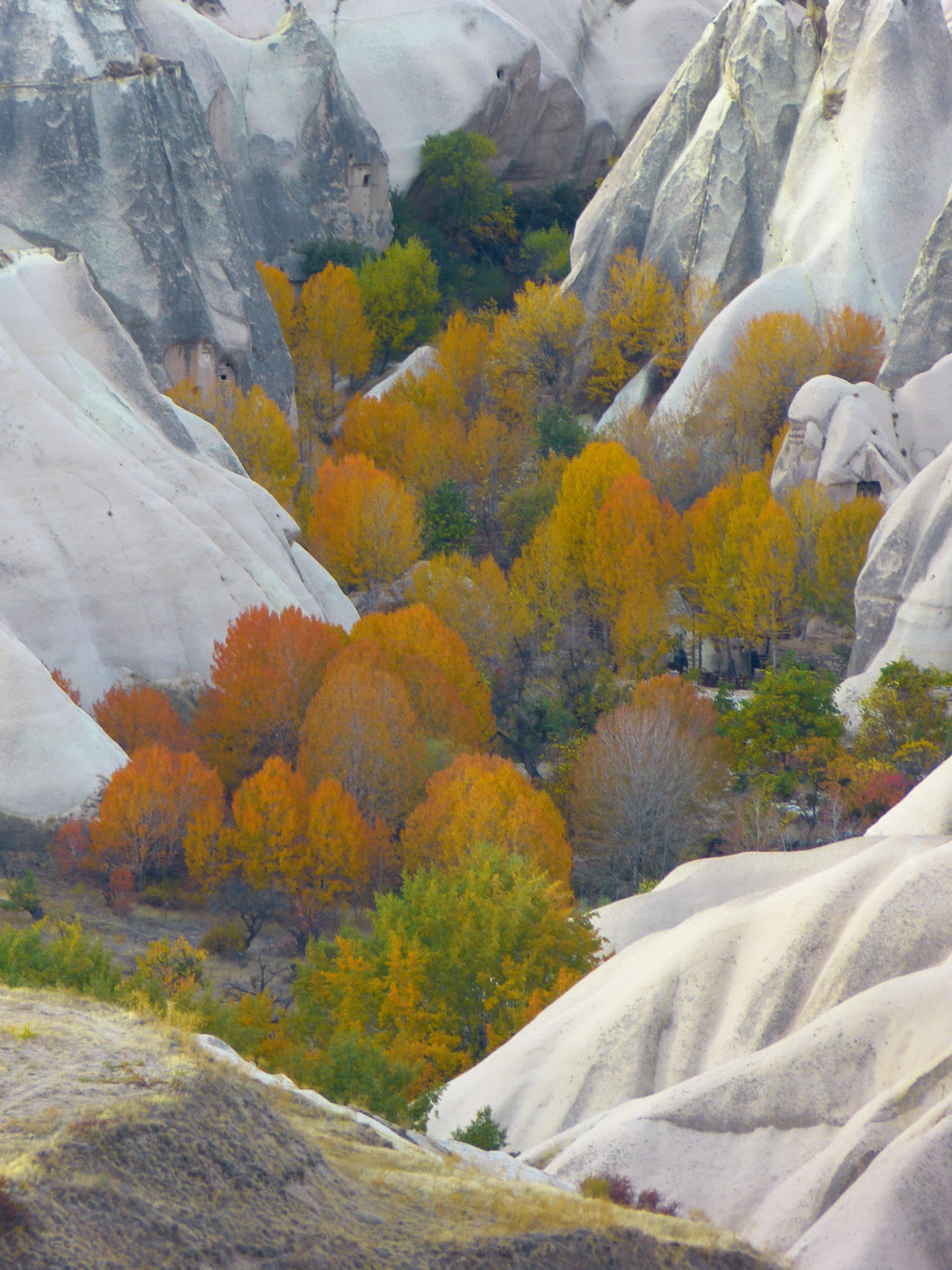 Fotoğraf Peyzaj Kaya çöl Dağ Kar Kış çiçek Vadi Dağ Sırası