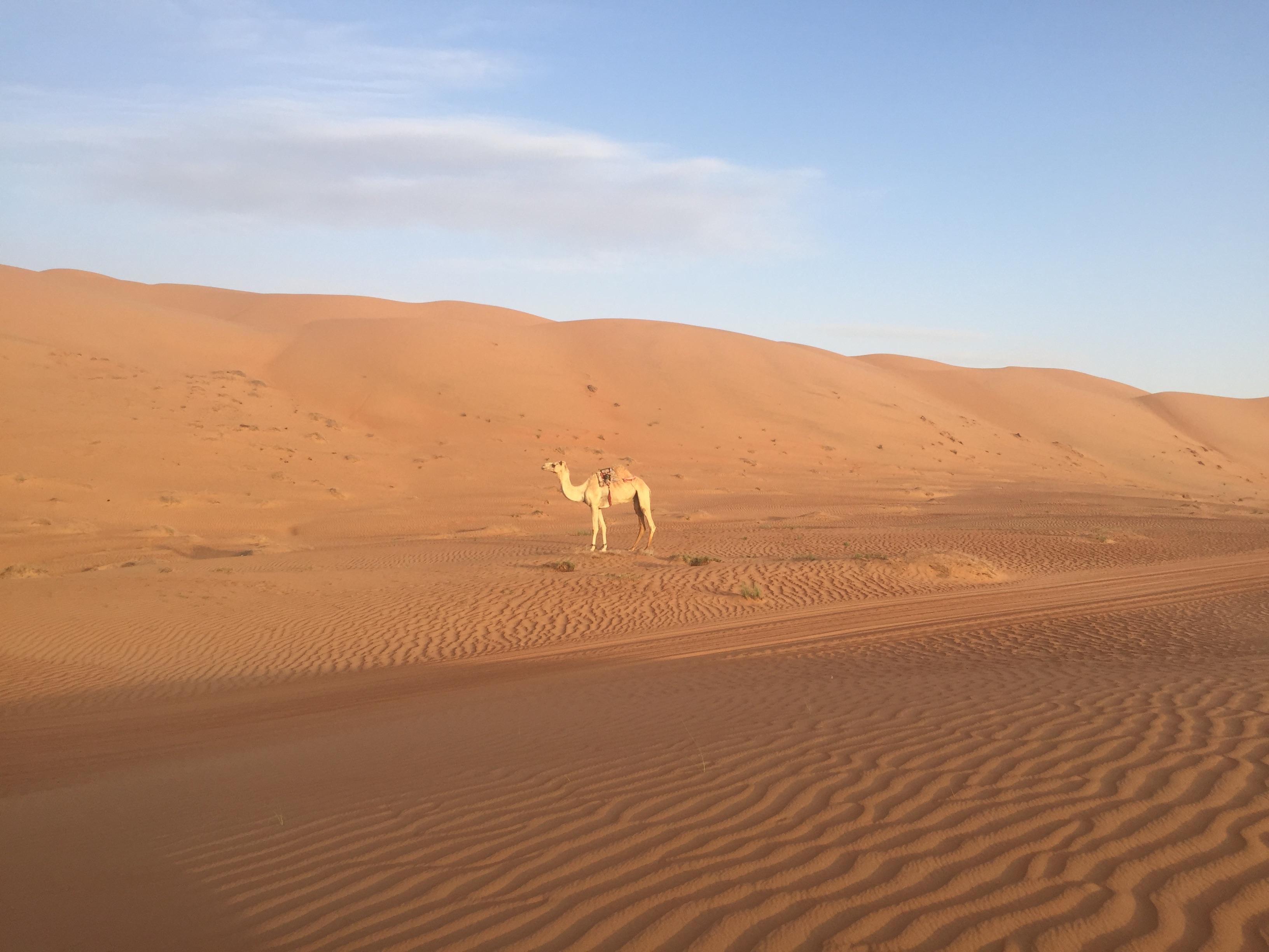 певица, поиск пустыня картинки должны дополнять гармонировать