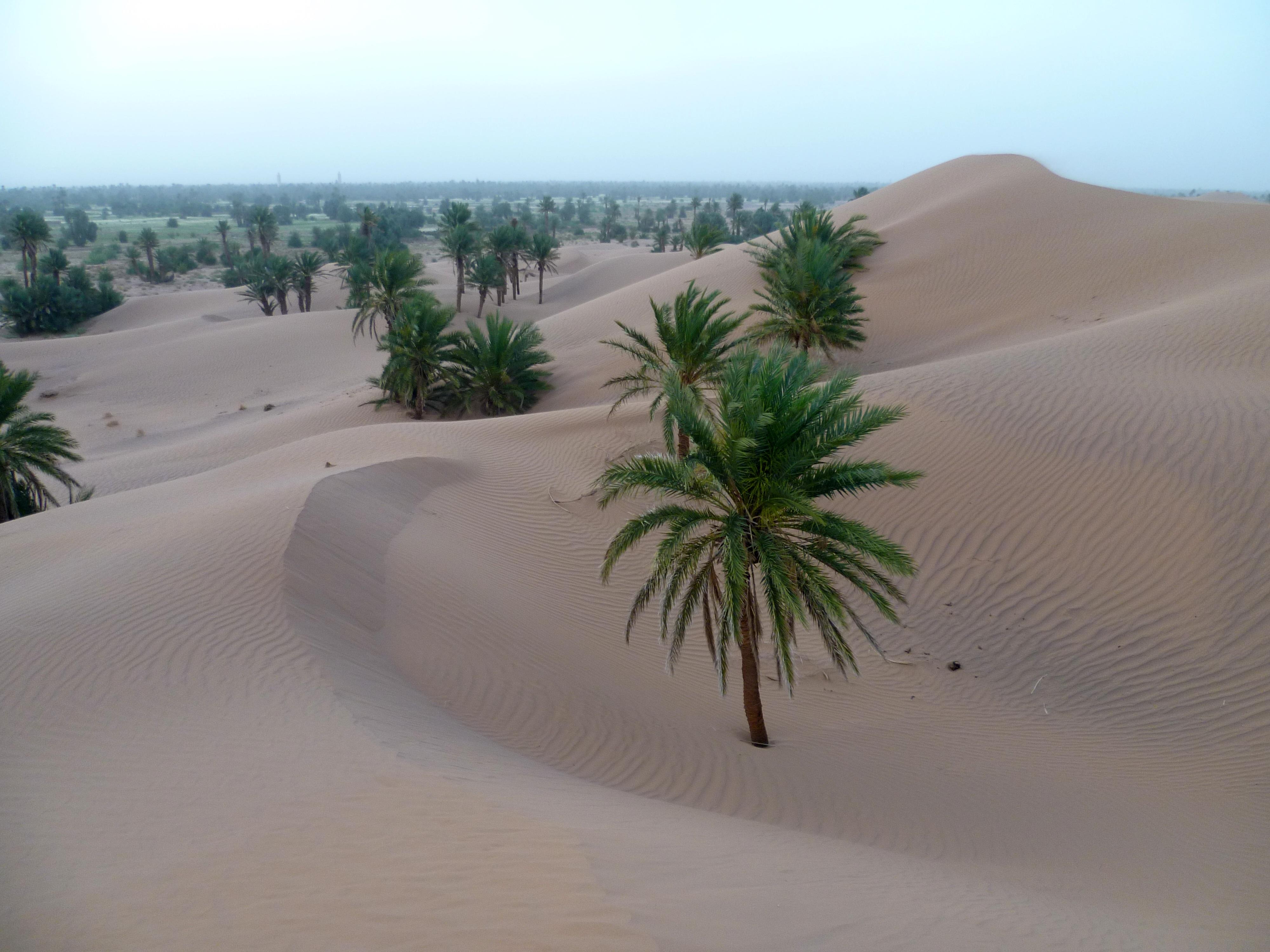 Картинки пальма в пустыне
