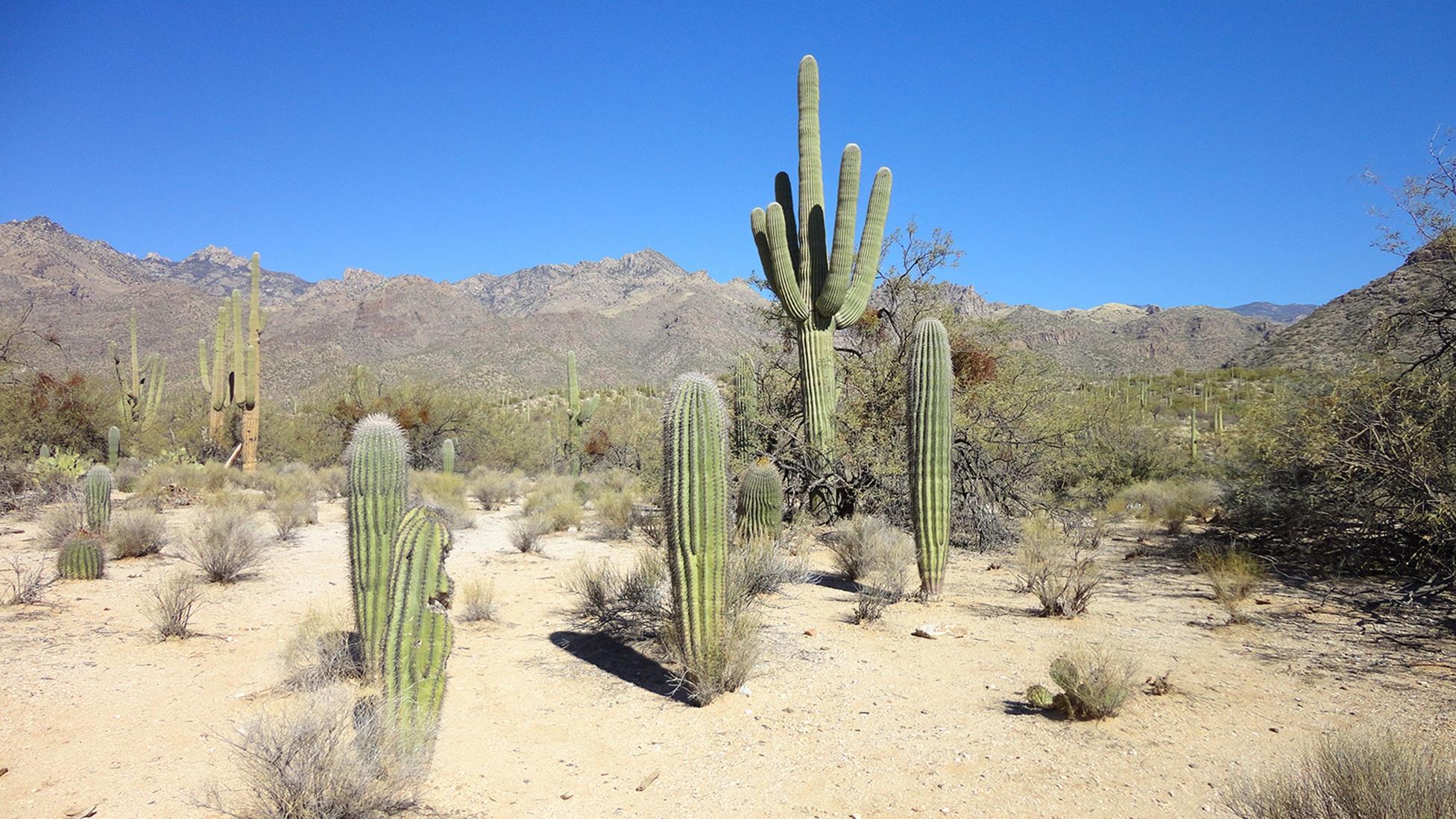 sahara desert plants - HD1953×1099