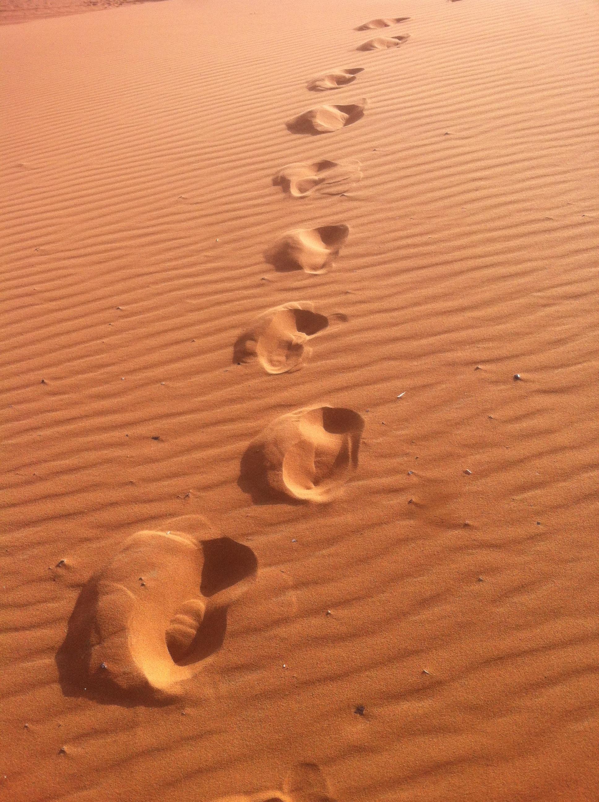 Free Images : landscape, sand, wing, wood, track, desert