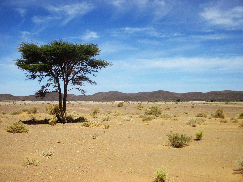 Images gratuites paysage le sable bois d sert sol - Felin de la savane ...
