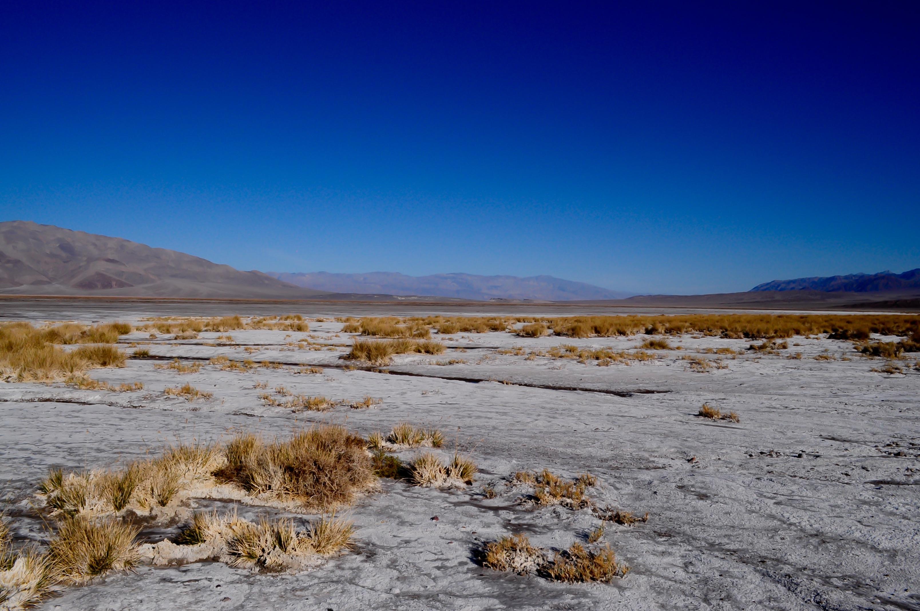 тебе картинка арктические почвы любит поострее