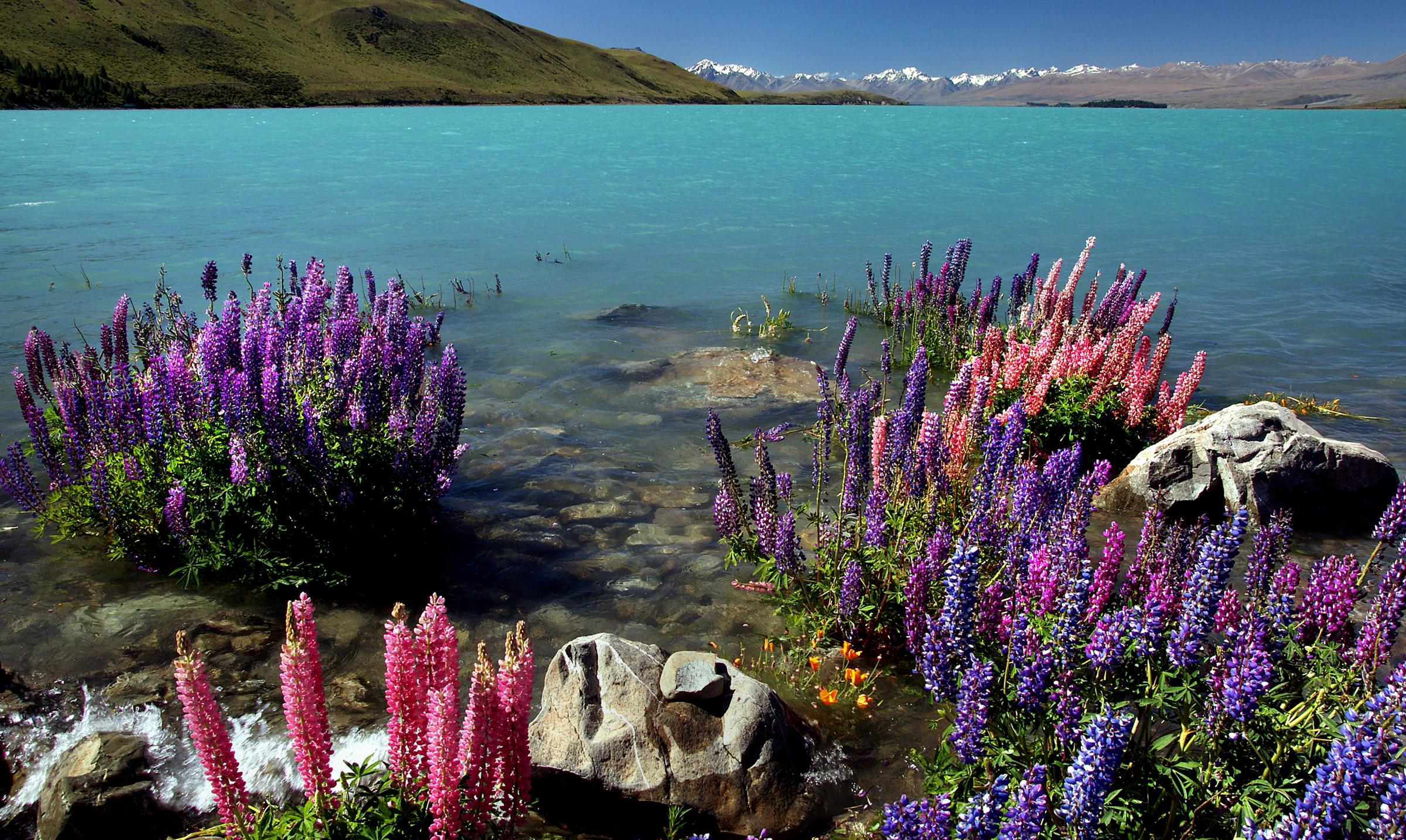 стрижка, прическа красивые дикие цветы фото настоящее