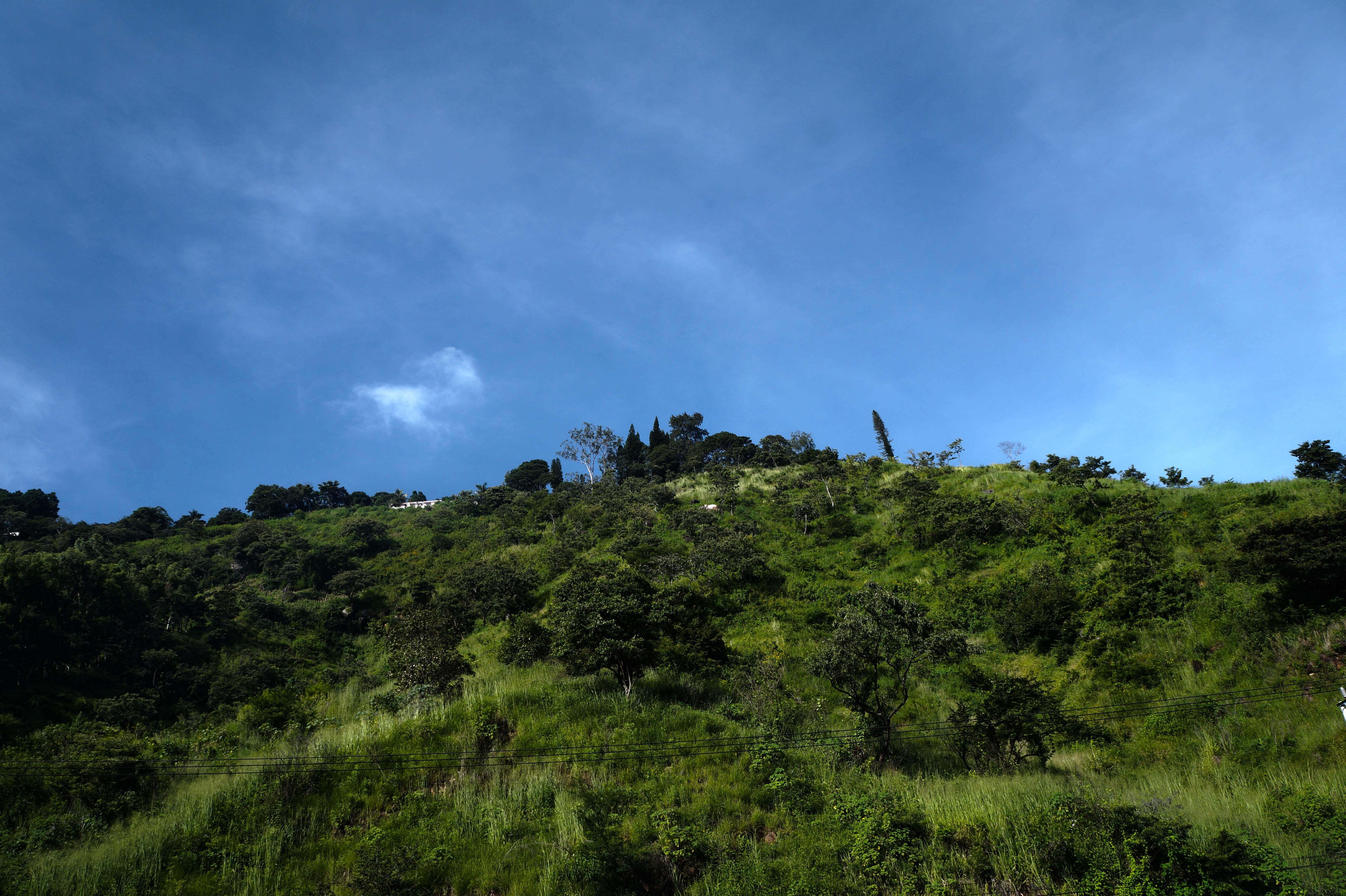 Fotos gratis : paisaje, mar, costa, árbol, naturaleza, bosque ...
