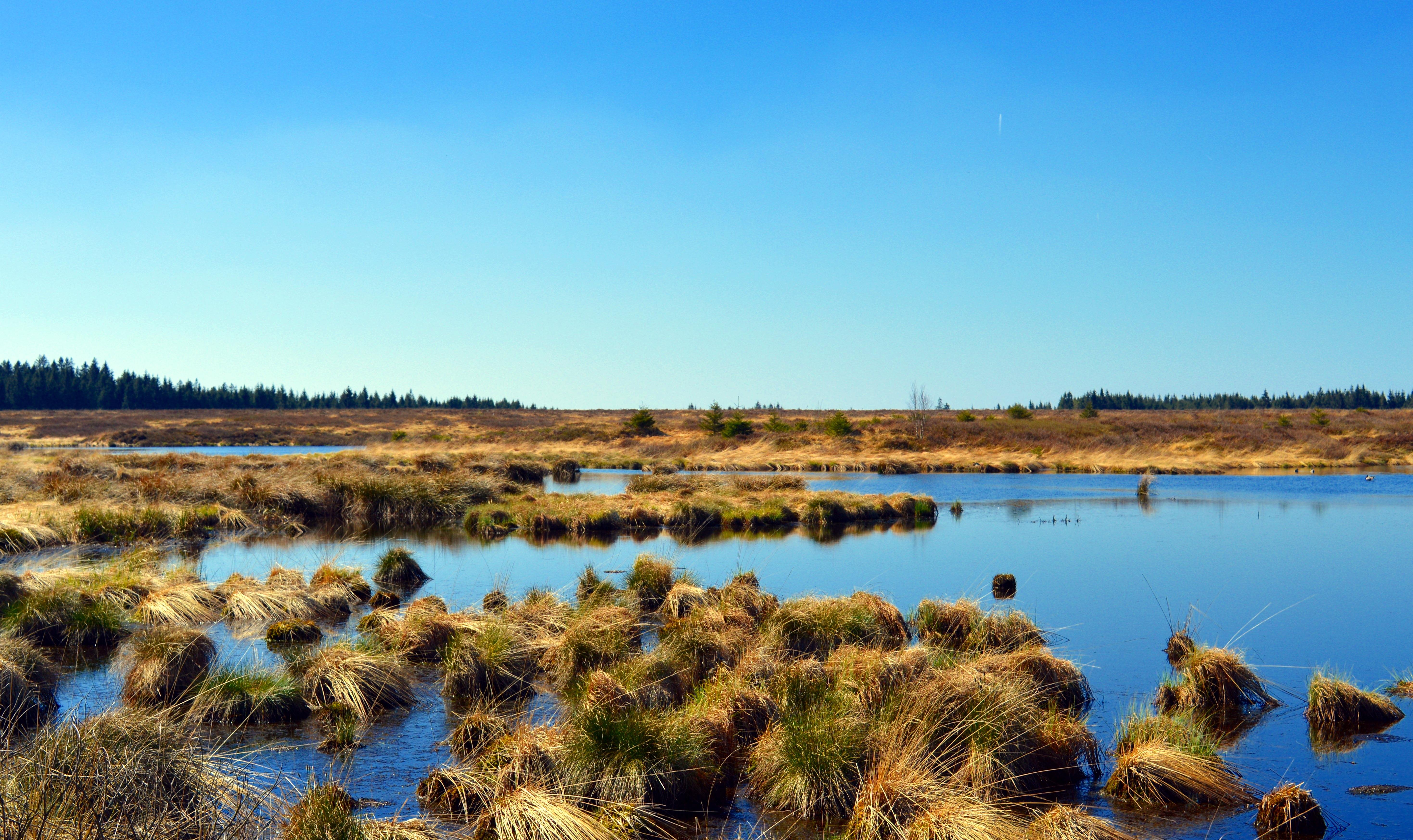 так картинки водно-болотных угодий спровоцировать