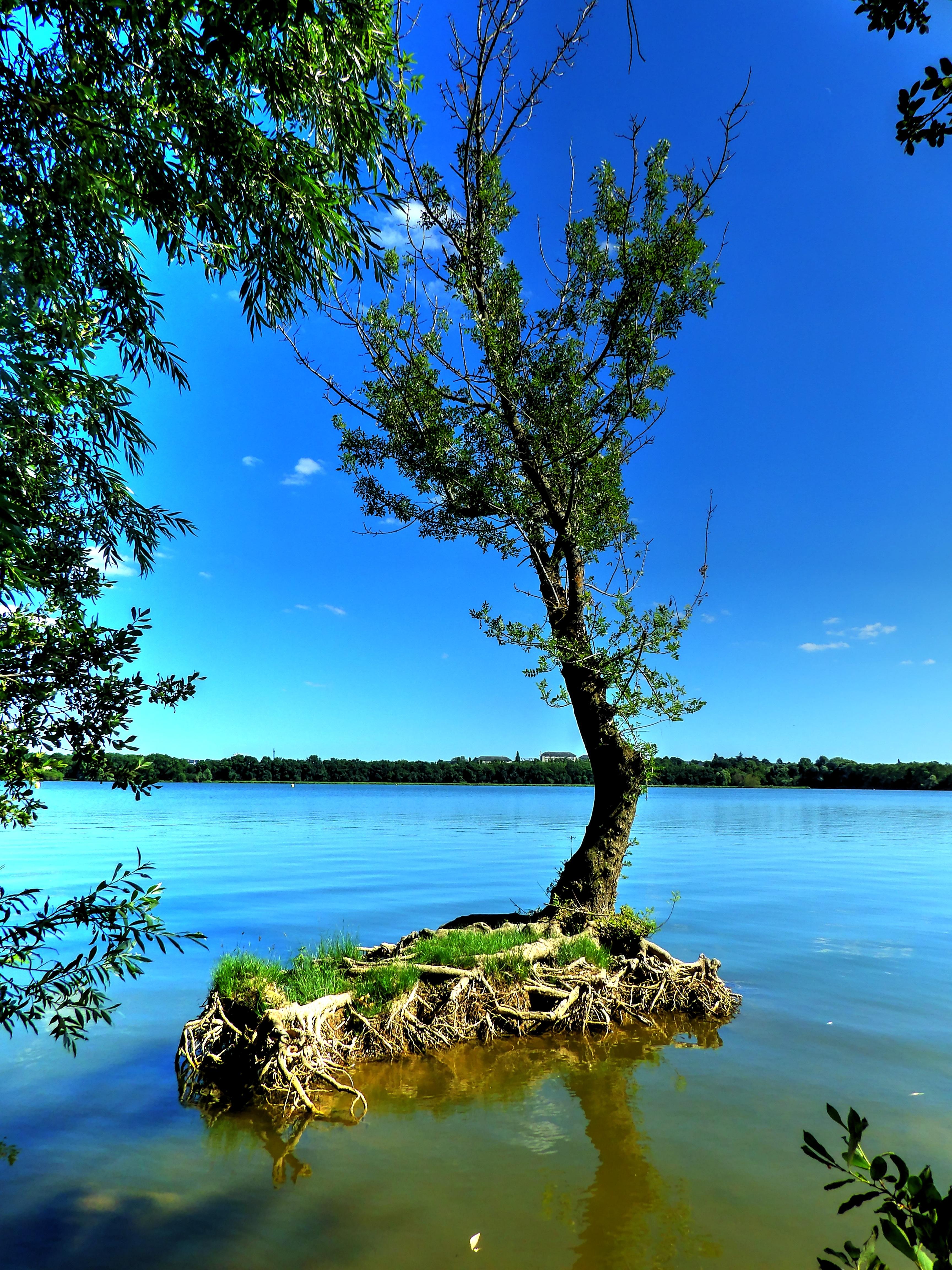 Fotos gratis paisaje mar costa rbol naturaleza for Arboles para plantar en verano