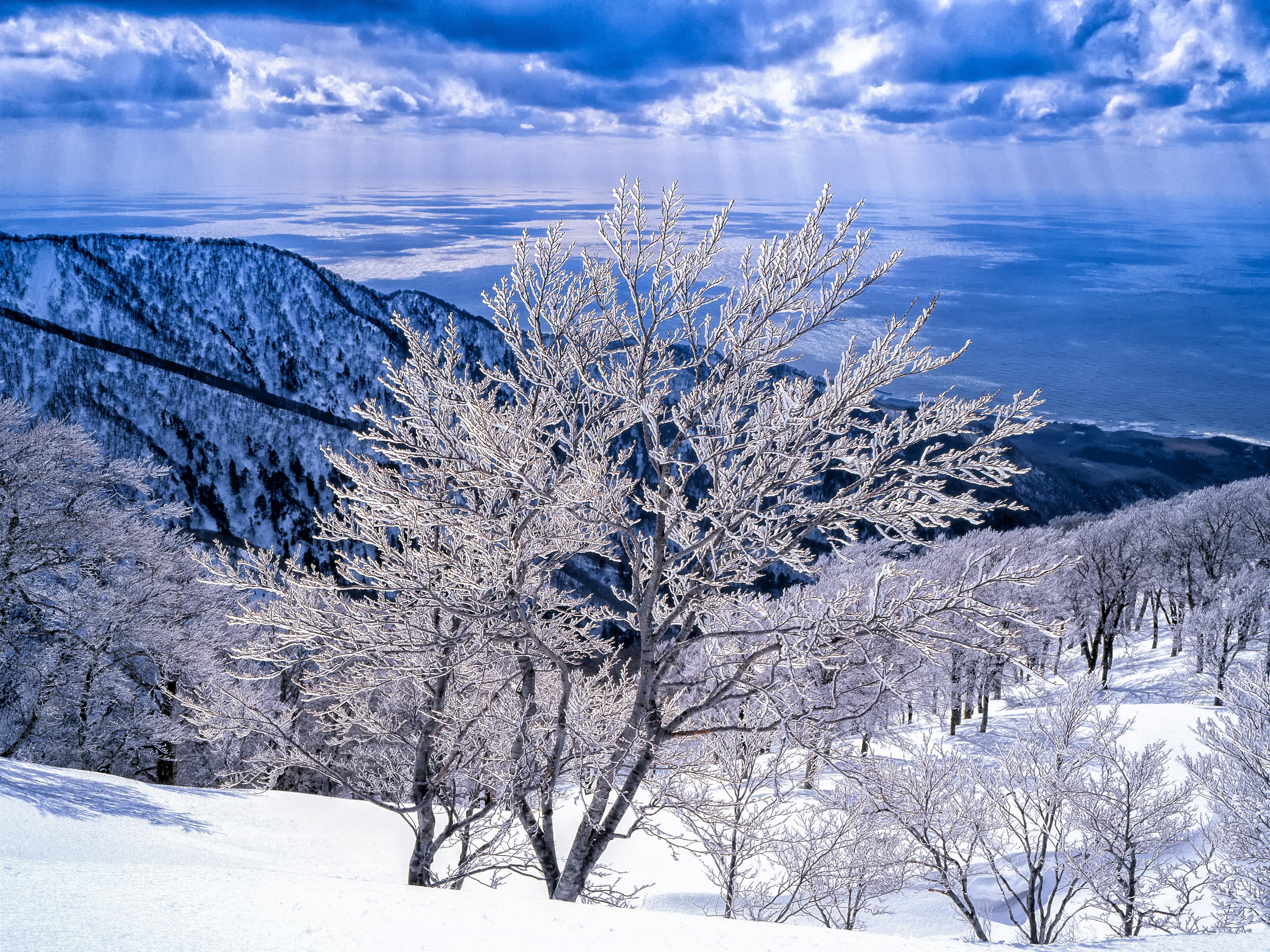 snow winter seasons sea - photo #28