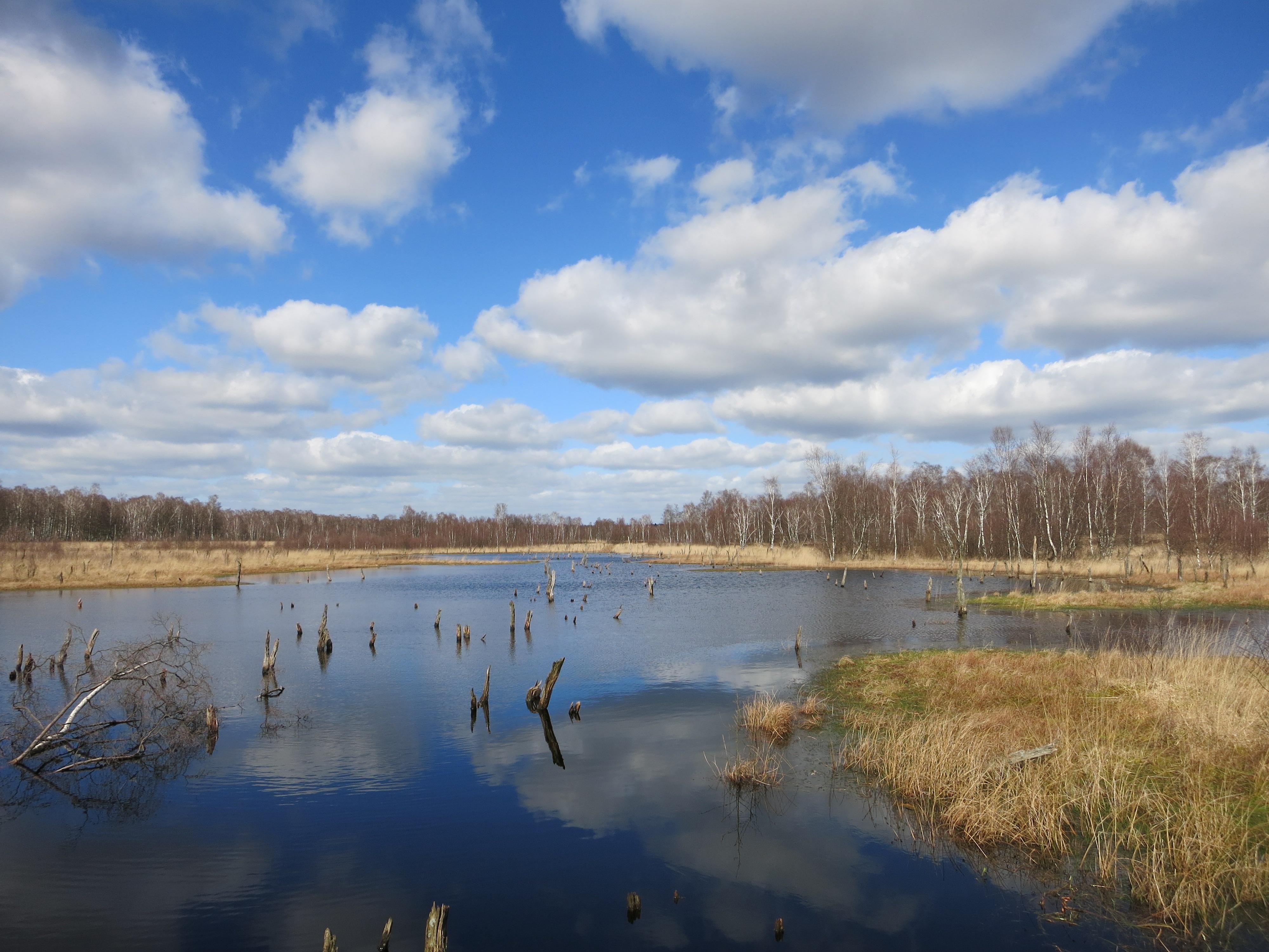 Free Images Landscape Sea Tree Grass Marsh Swamp
