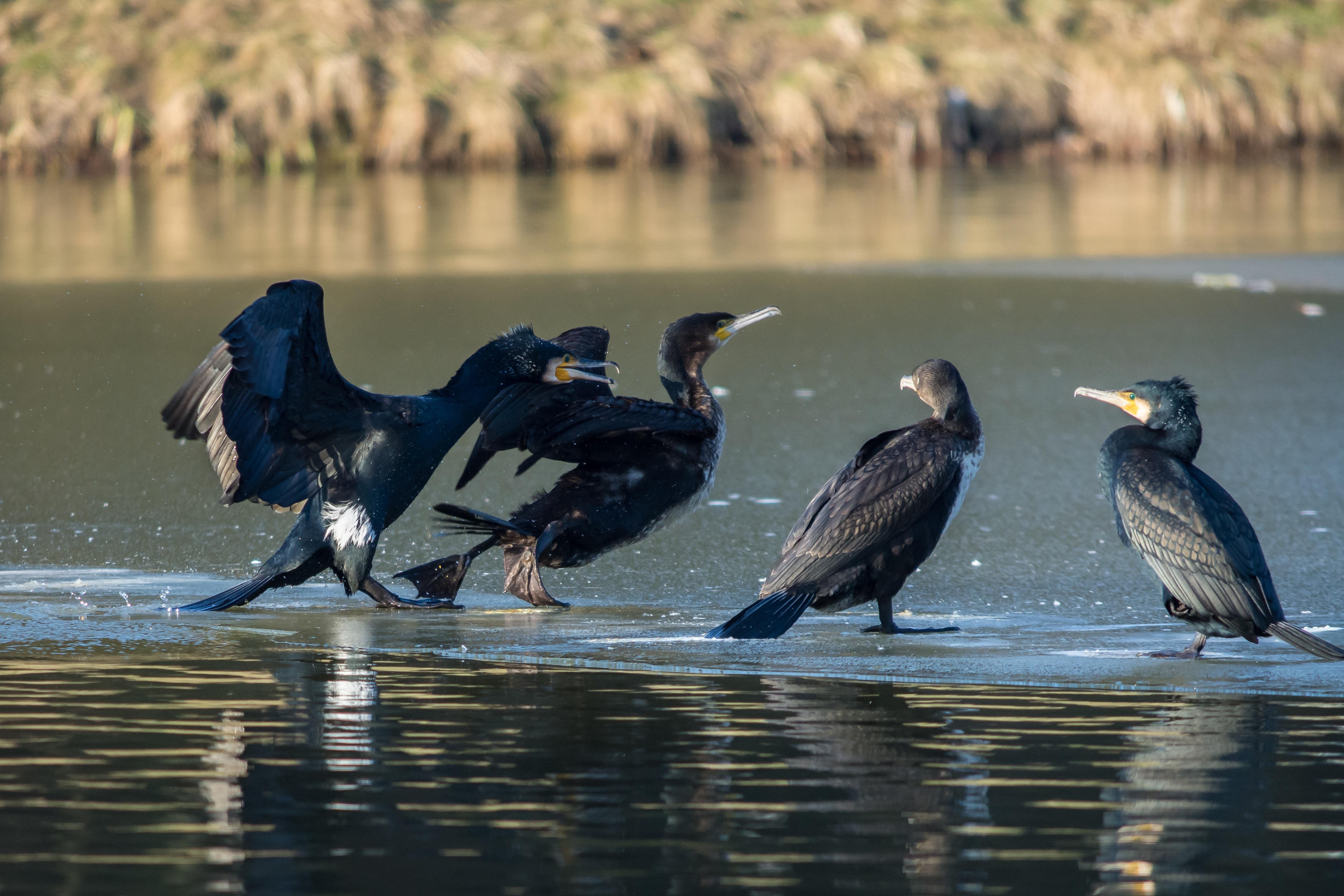 Κόσμο μεγάλο πουλί φωτογραφίες