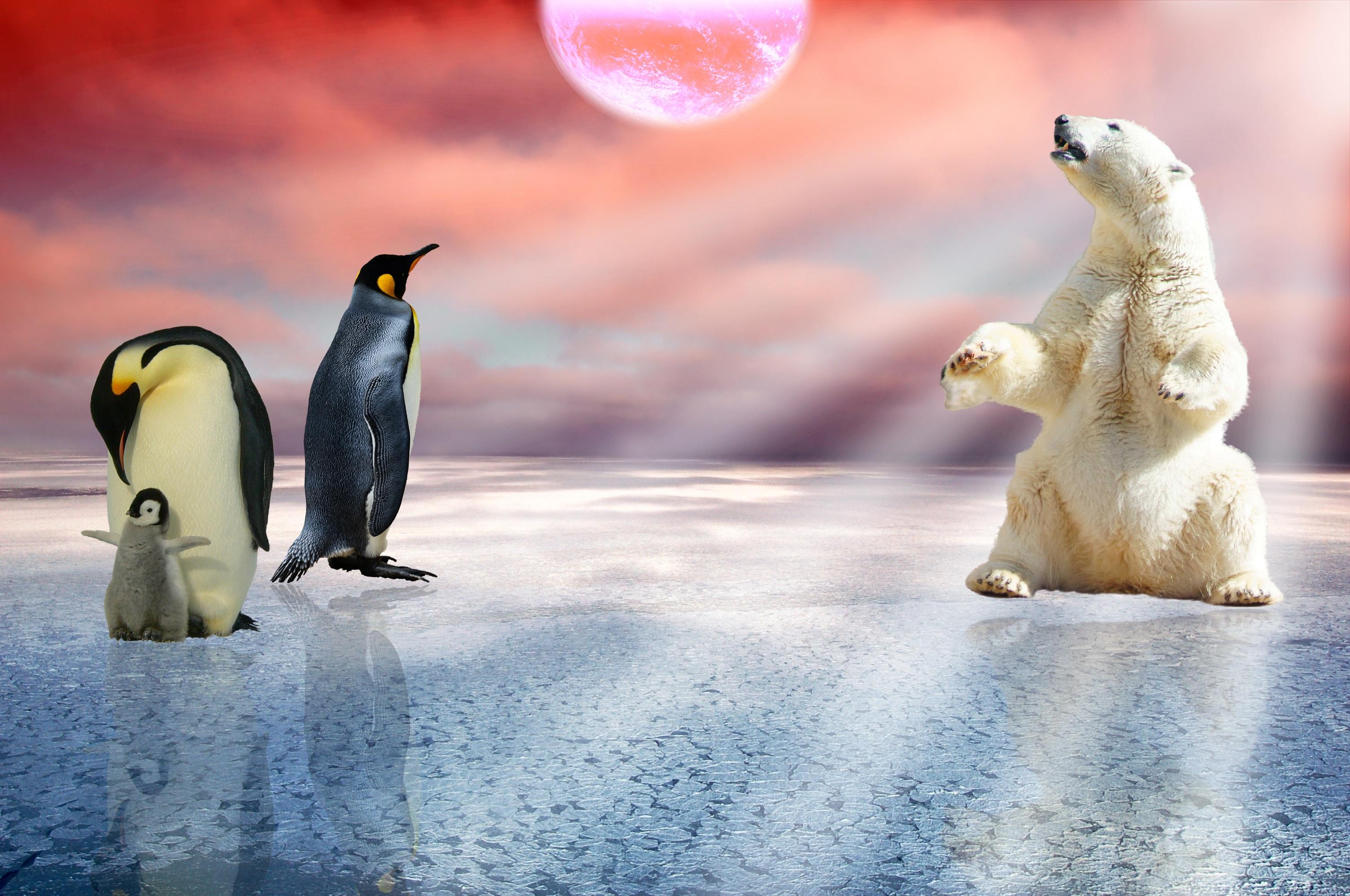 Christmas Outdoor Polar Bear