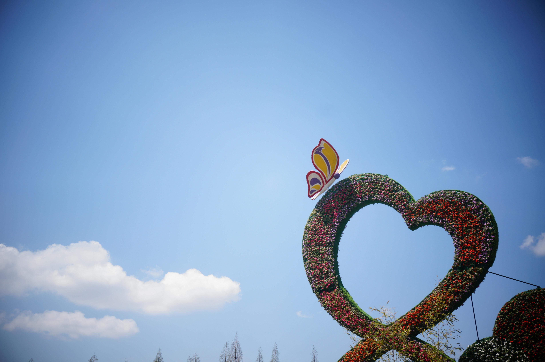 Free Images : landscape, summer, love, reflection, blue sky, hart