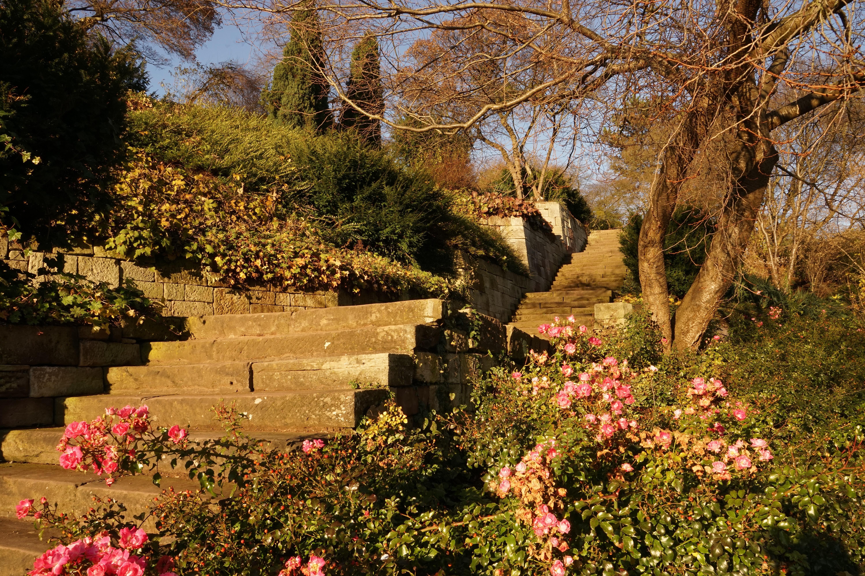 Free Images : landscape, tree, blossom, leaf, flower, autumn, botany ...