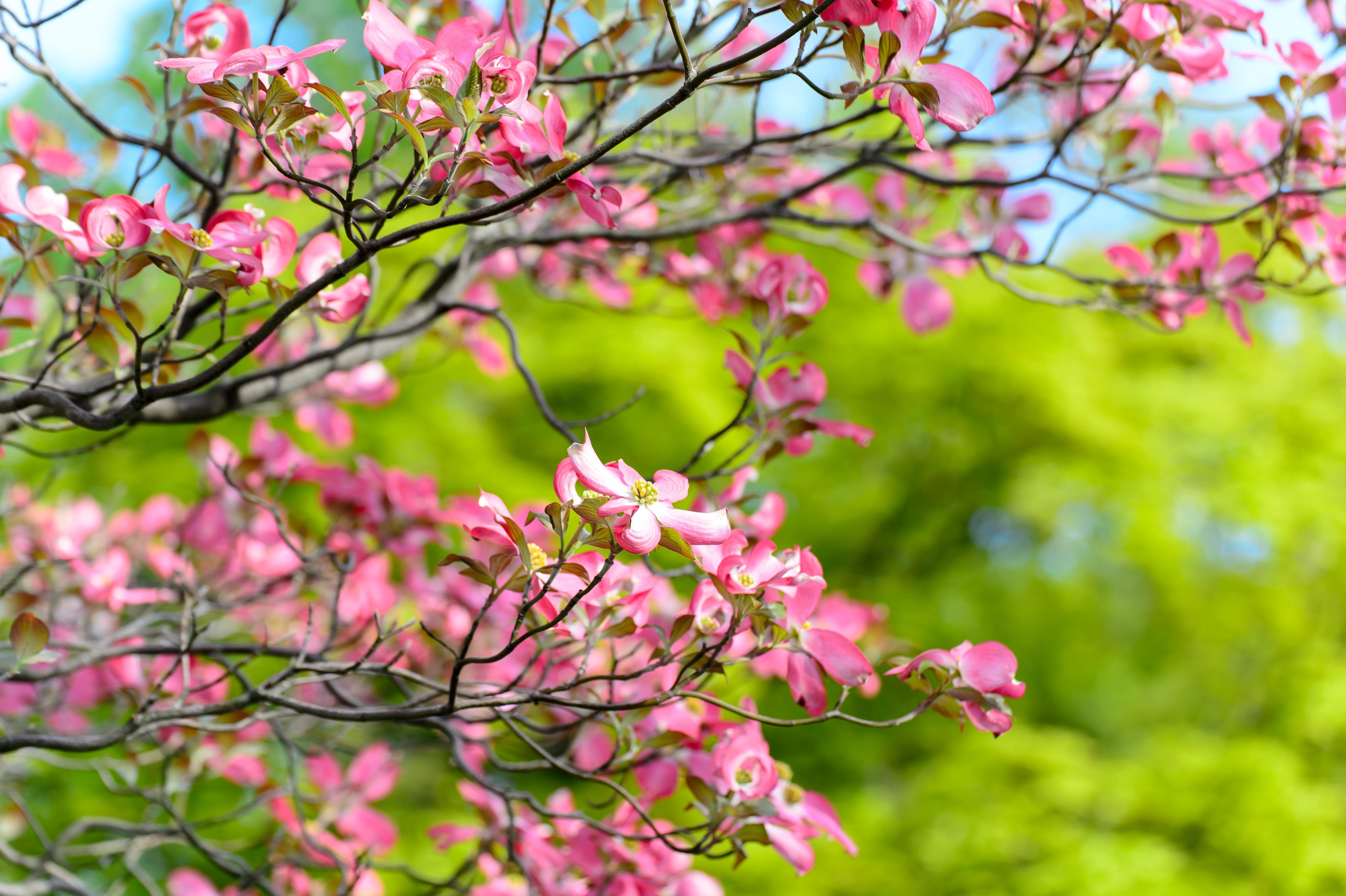 Free landscape tree branch sky leaf flower petal