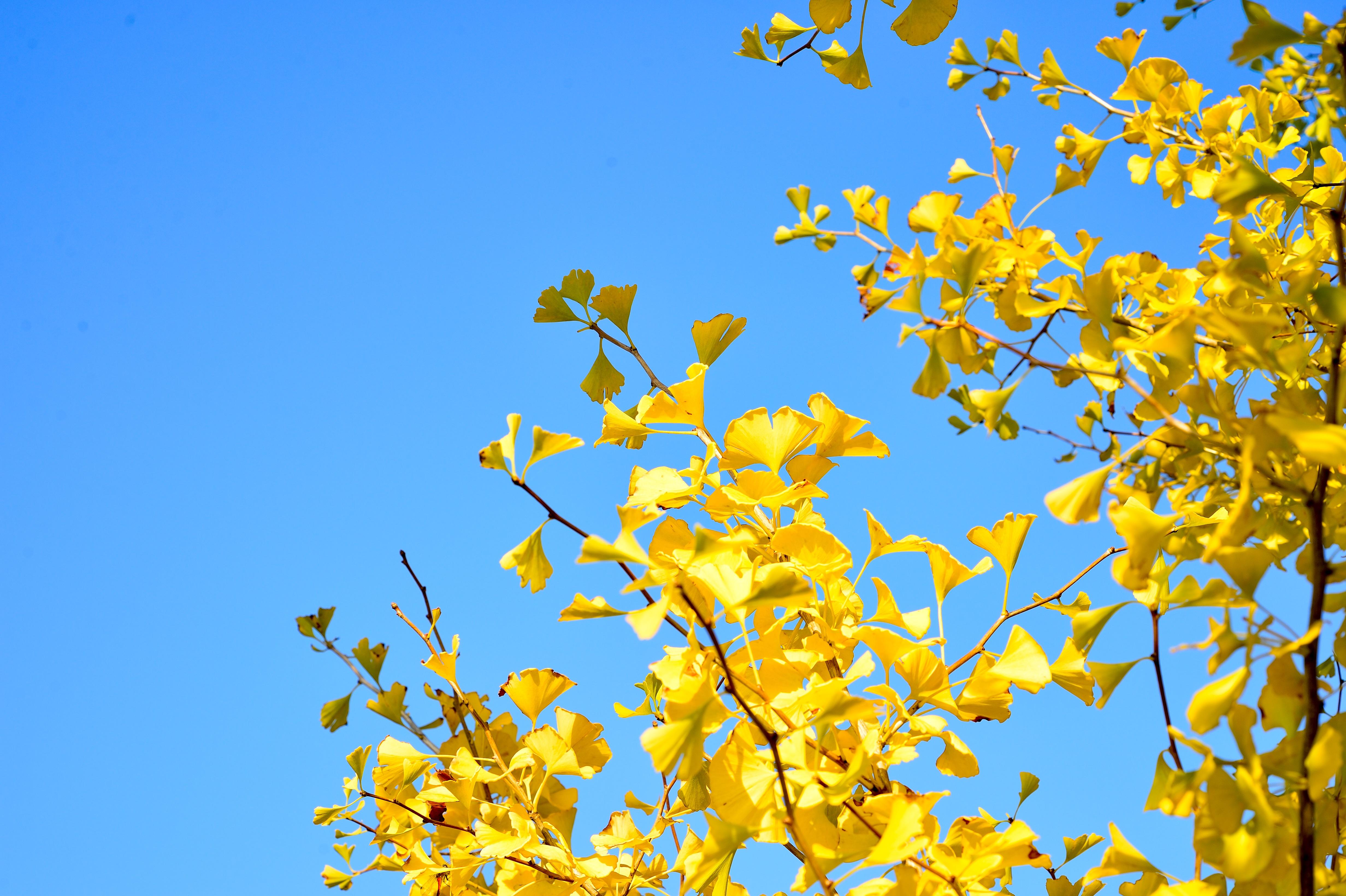 free images landscape branch blossom wood sunlight leaf