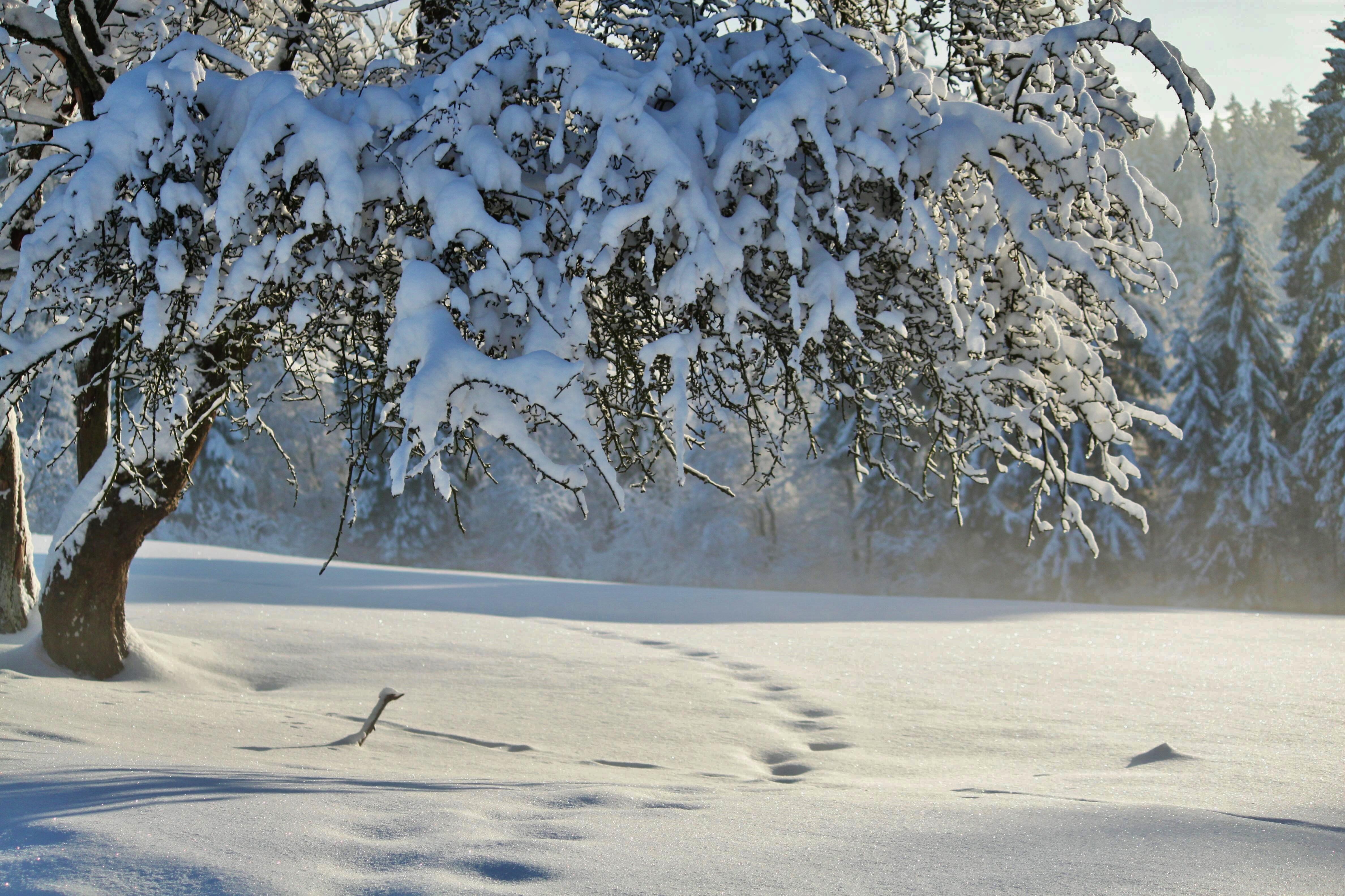 Картинка зима в декабре