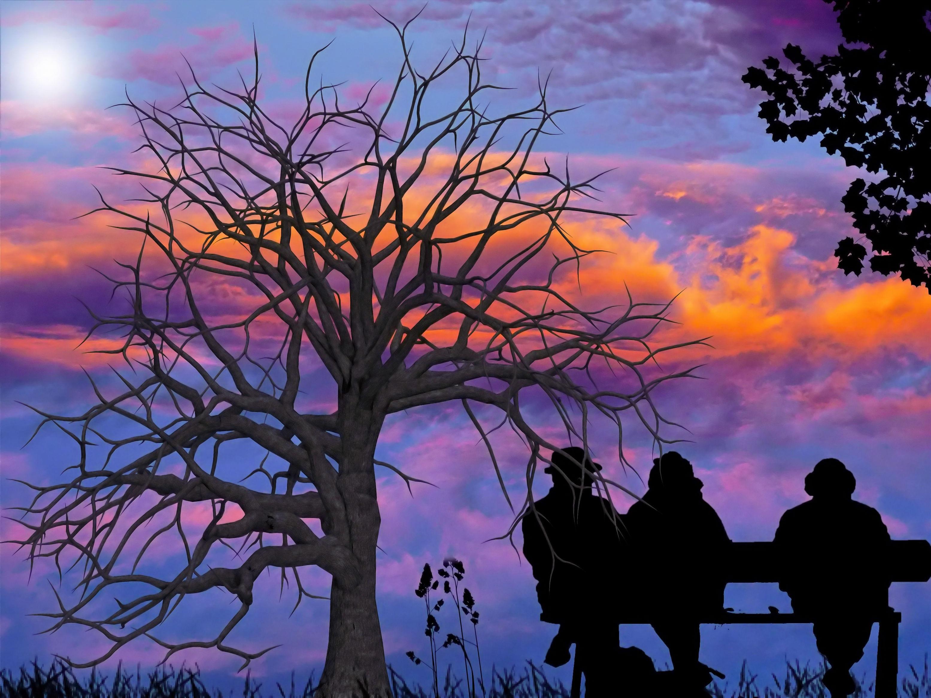 Gratis Afbeeldingen : landschap, boom, tak, silhouet, wolk, mensen ...