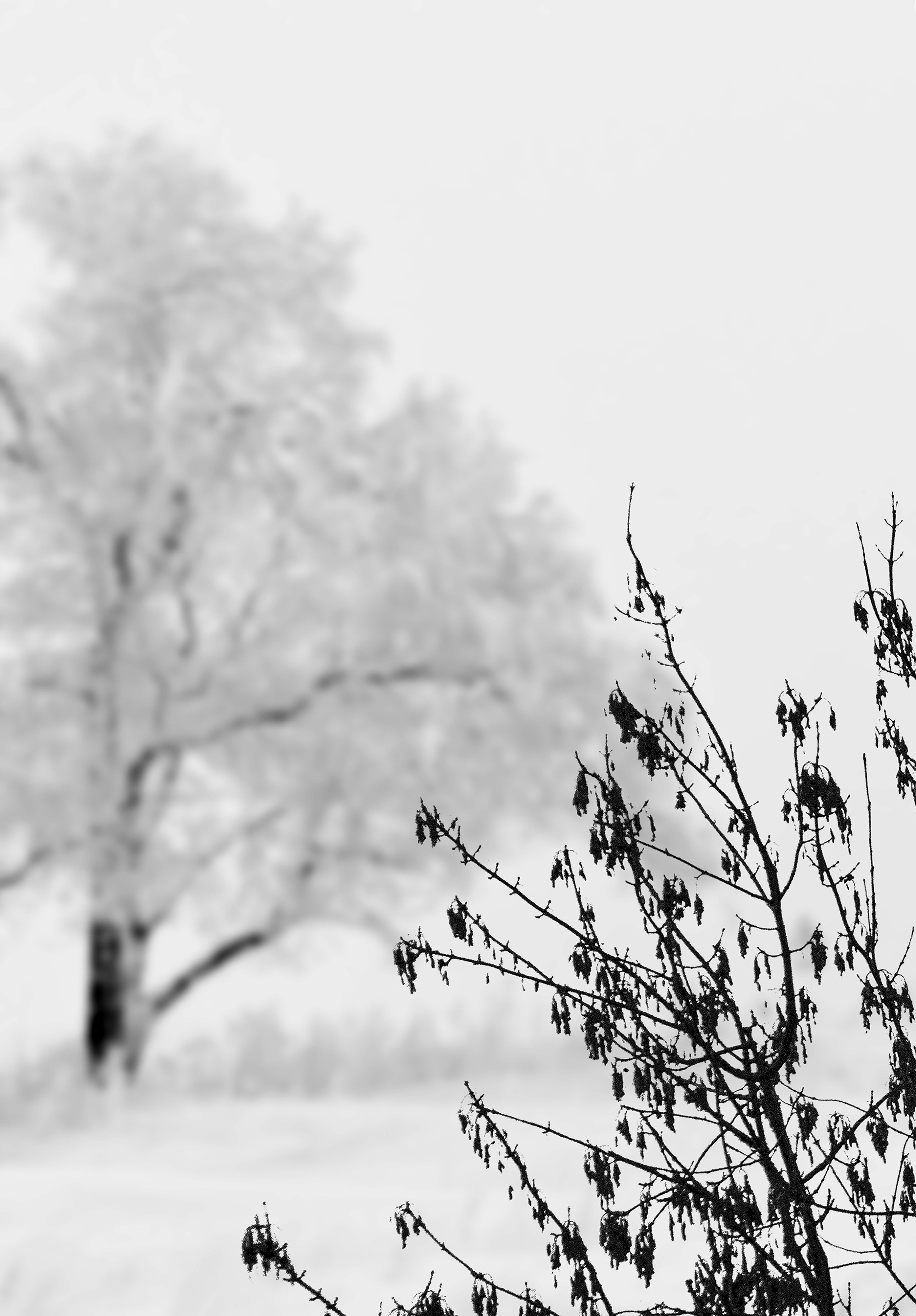Картинки весна монохром