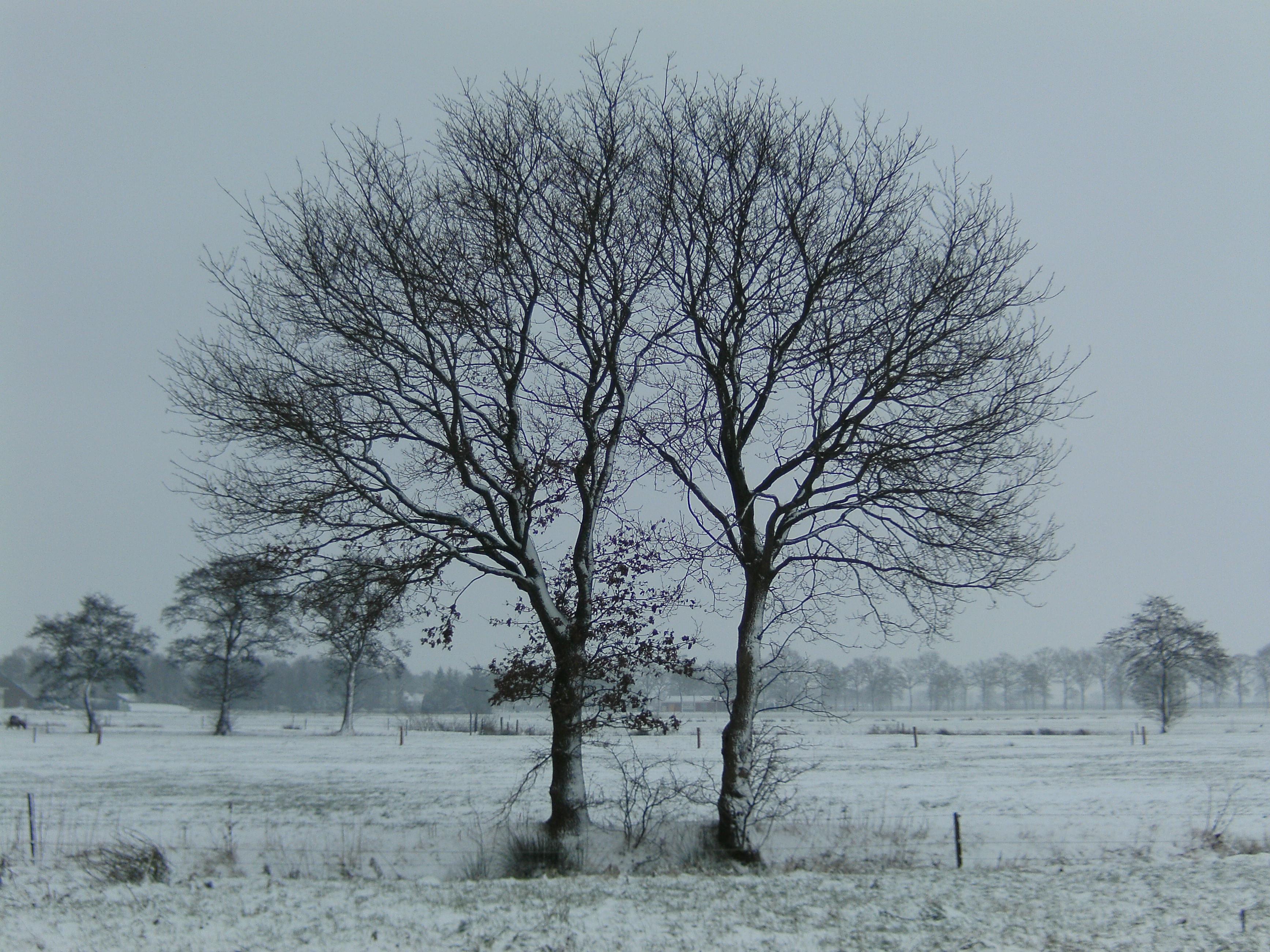 конце картинка дерево зимой без снега сухого бревна вологодского