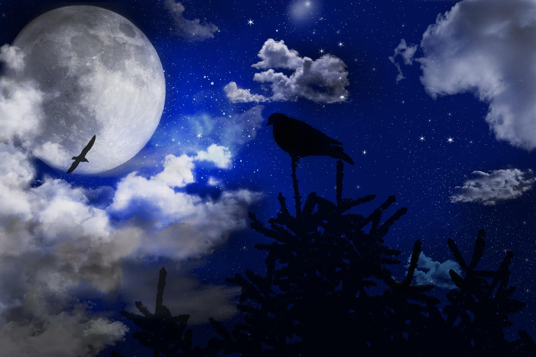 Gambar Pemandangan Pohon Awan Langit Malam Bintang Suasana