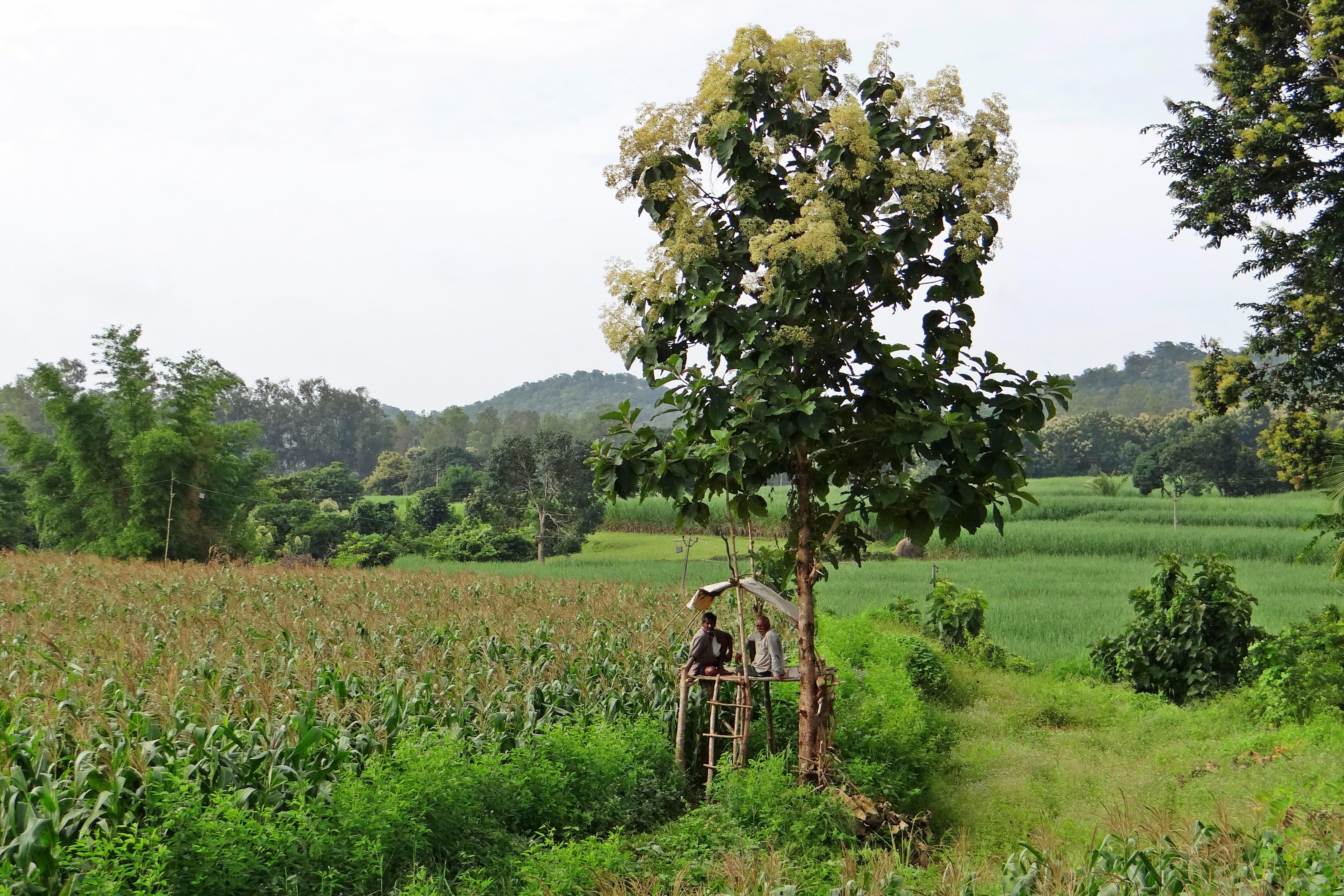 Free Images : landscape, meadow, flower, crop, pasture, natural