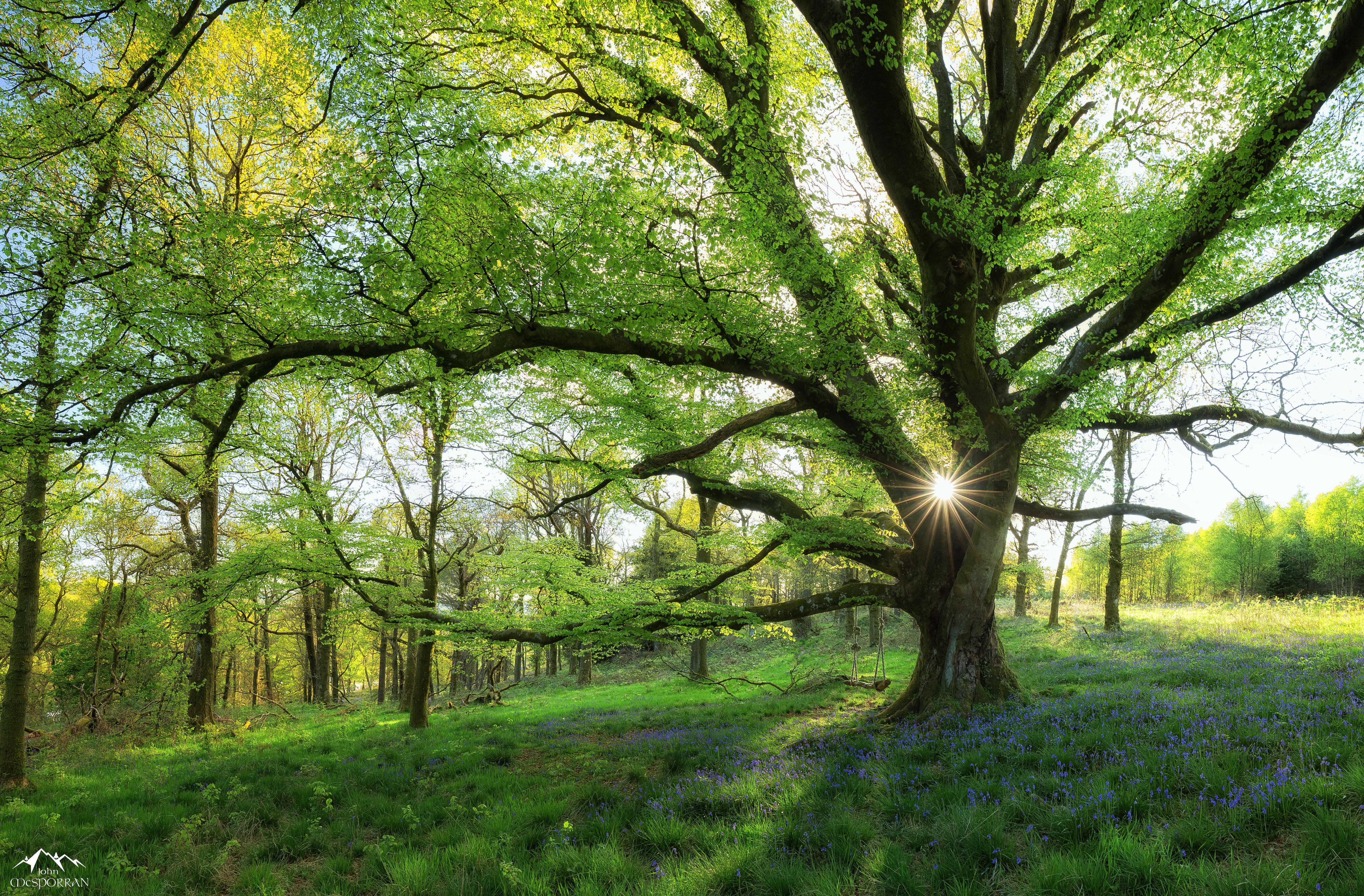 Free images landscape tree branch sunlight leaf for Garden trees scotland