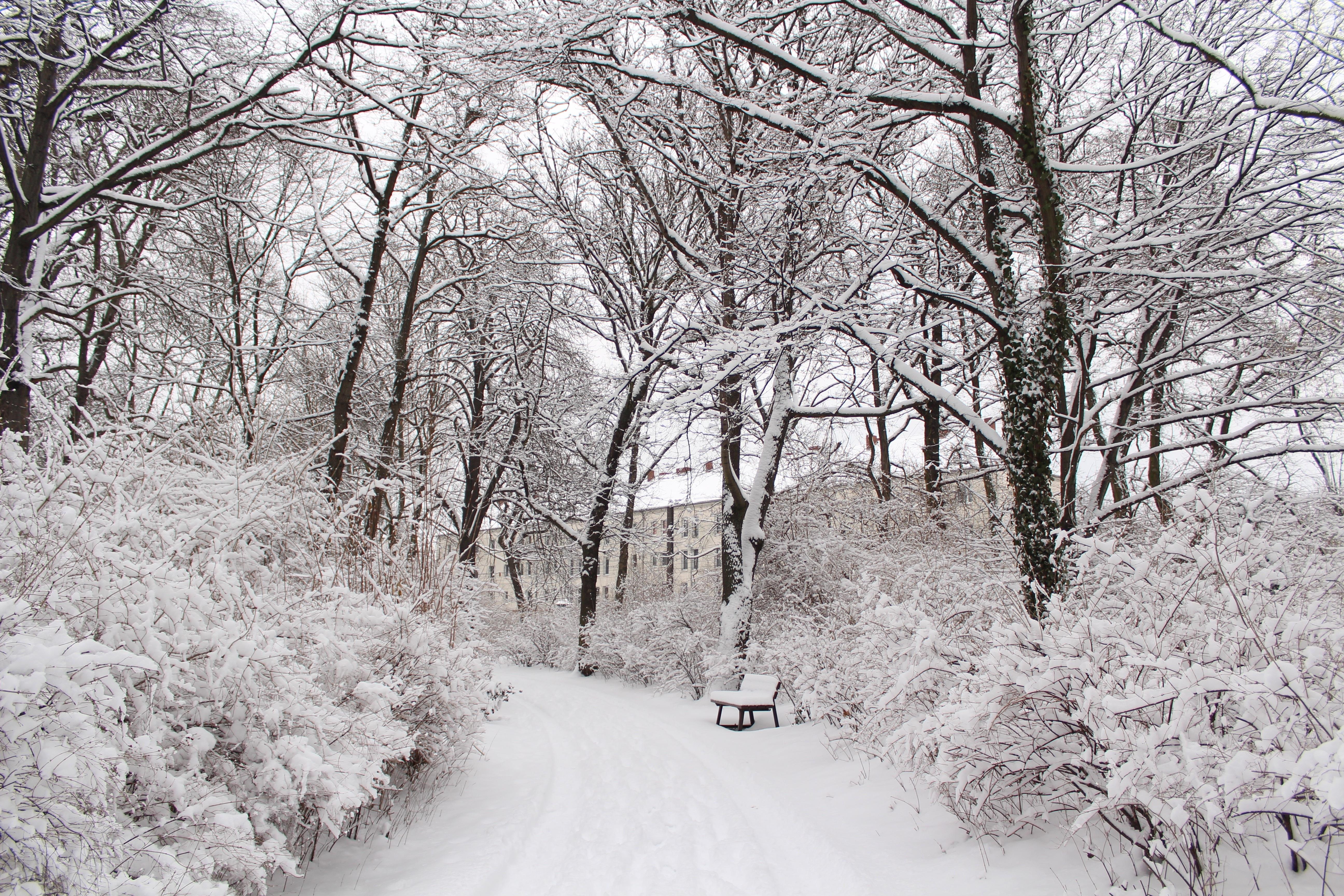 снежная погода картинка