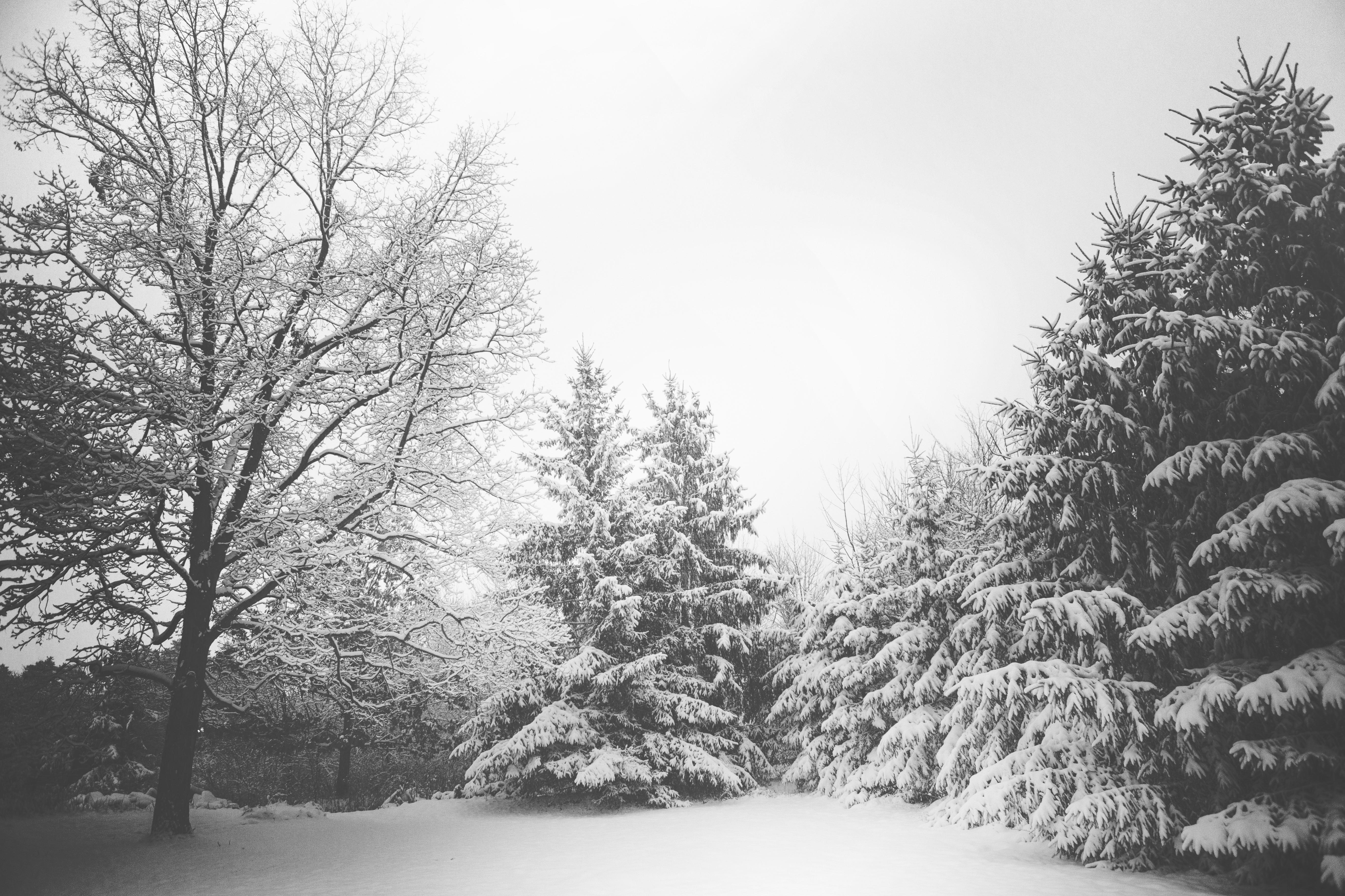 free images landscape tree forest branch snow winter black
