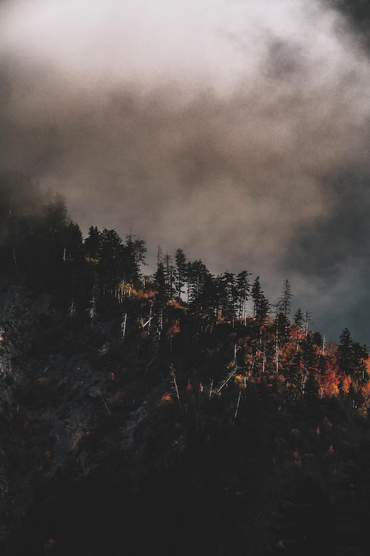 Free Images Landscape Tree Forest Cloud Sky Fog