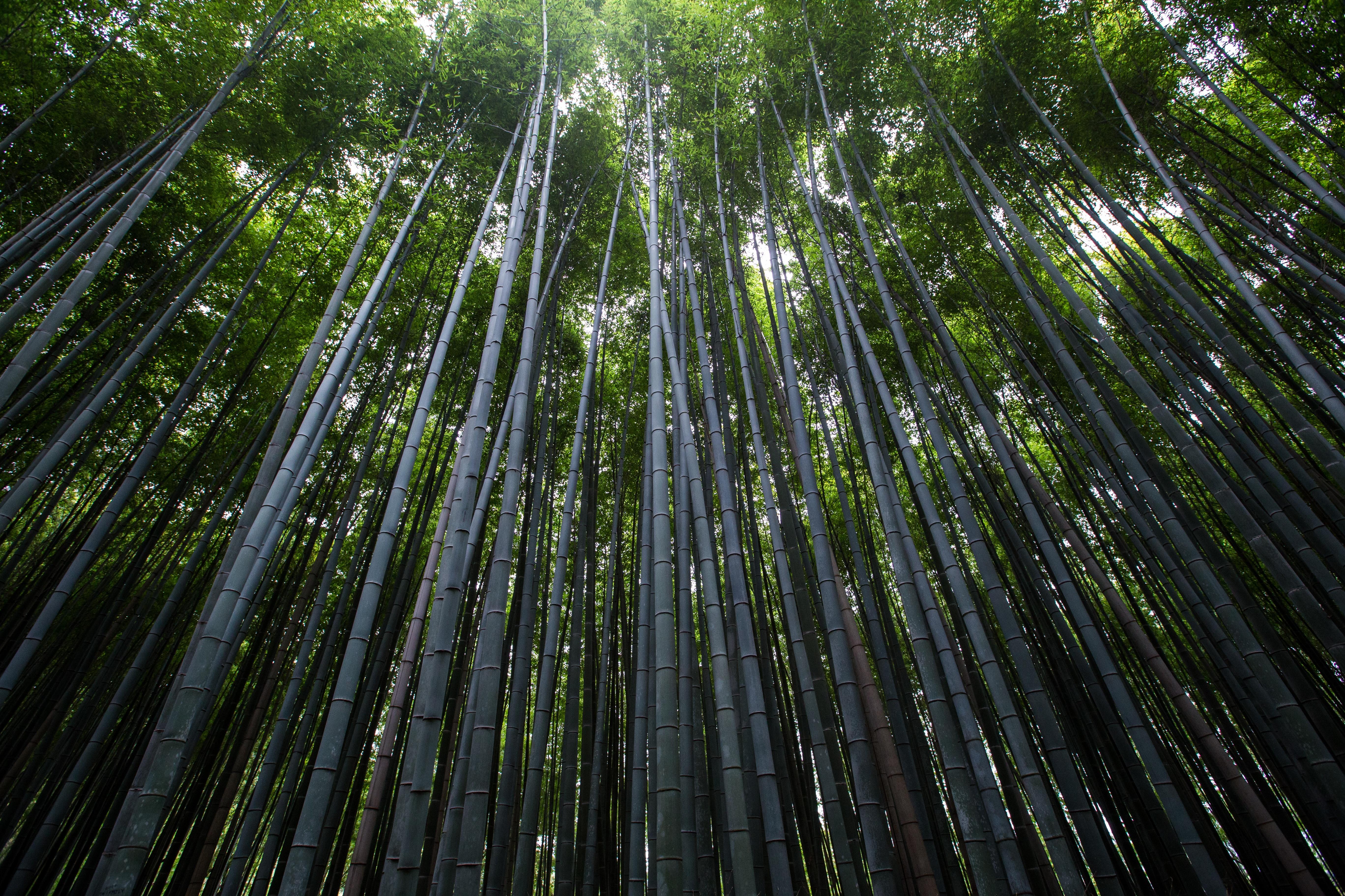 Images gratuites paysage arbre herbe branche lumi re for Plante jungle