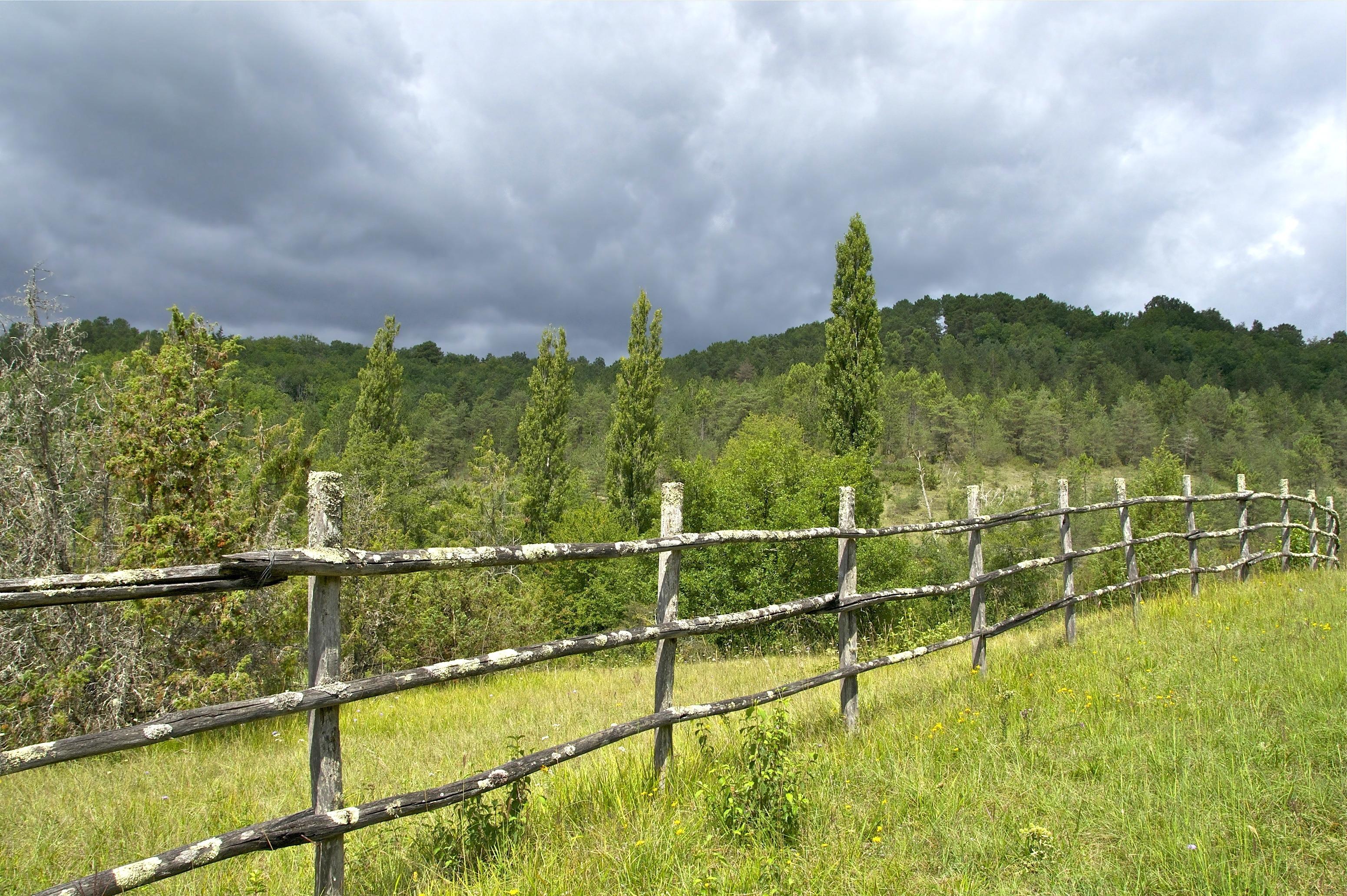 images gratuites paysage arbre for t herbe ciel vignoble champ ferme prairie campagne. Black Bedroom Furniture Sets. Home Design Ideas