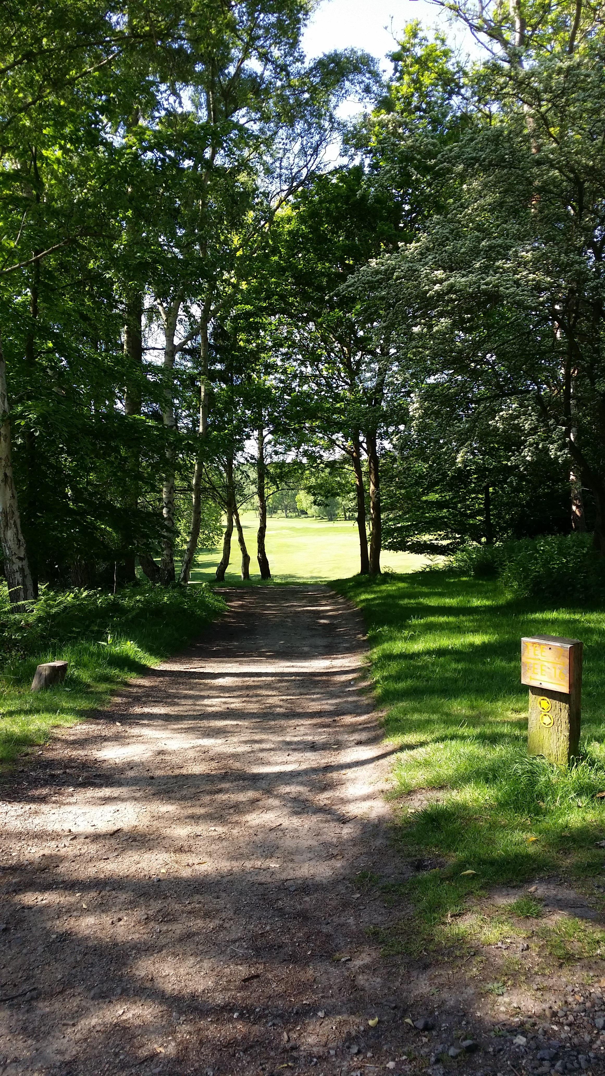 kostenlose foto landschaft baum wald gras draussen weg rasen wiese blatt aussicht sommer grn szenisch flagge herbst park hinterhof - Hinterhof Landschaften Bilder