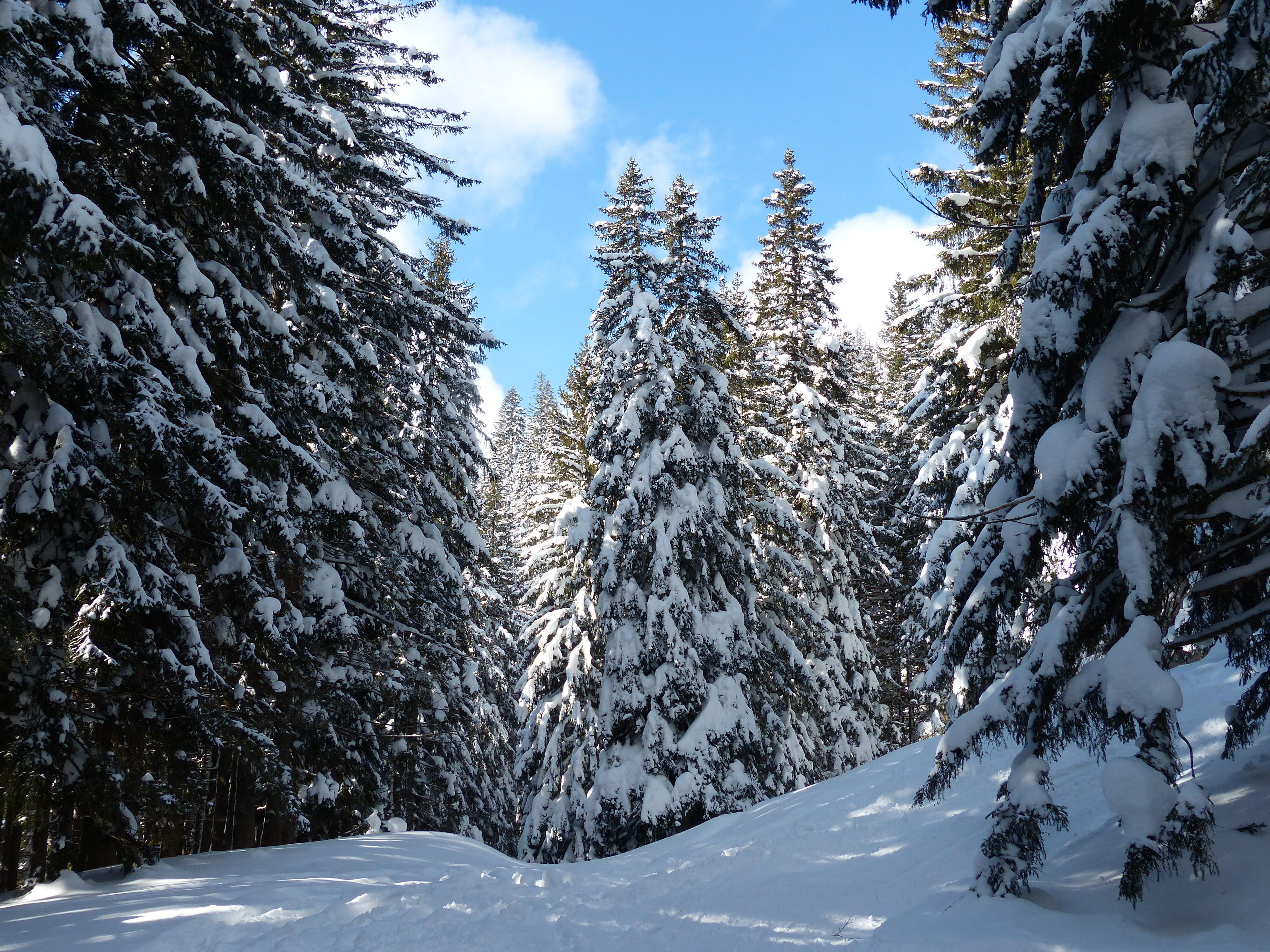 images gratuites paysage arbre for t montagne du froid hiver ciel cha ne de montagnes. Black Bedroom Furniture Sets. Home Design Ideas