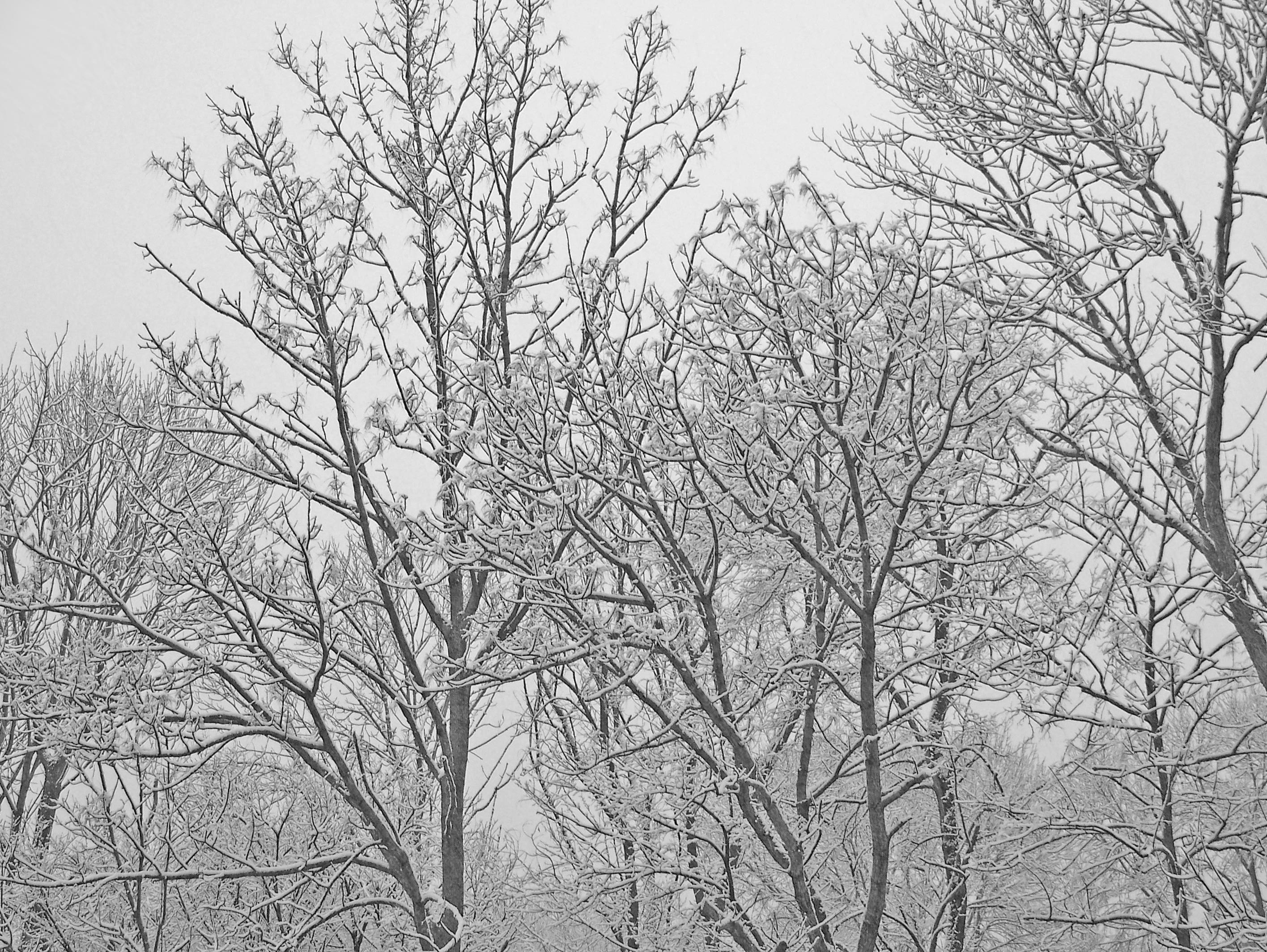 Gambar Pemandangan Hutan Outdoor Cabang Musim Dingin Hitam
