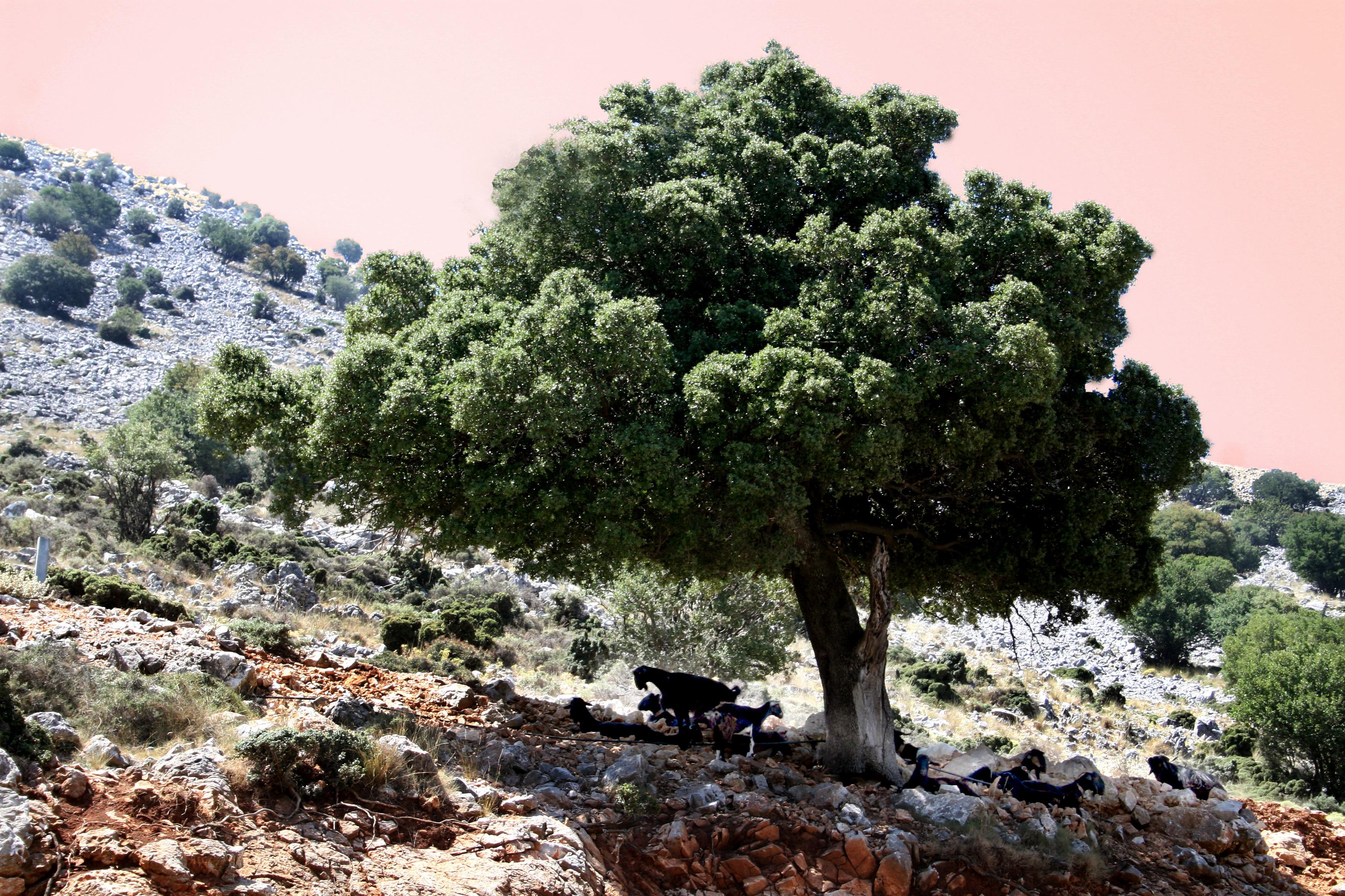 любишь растения деревья фото новые лоты