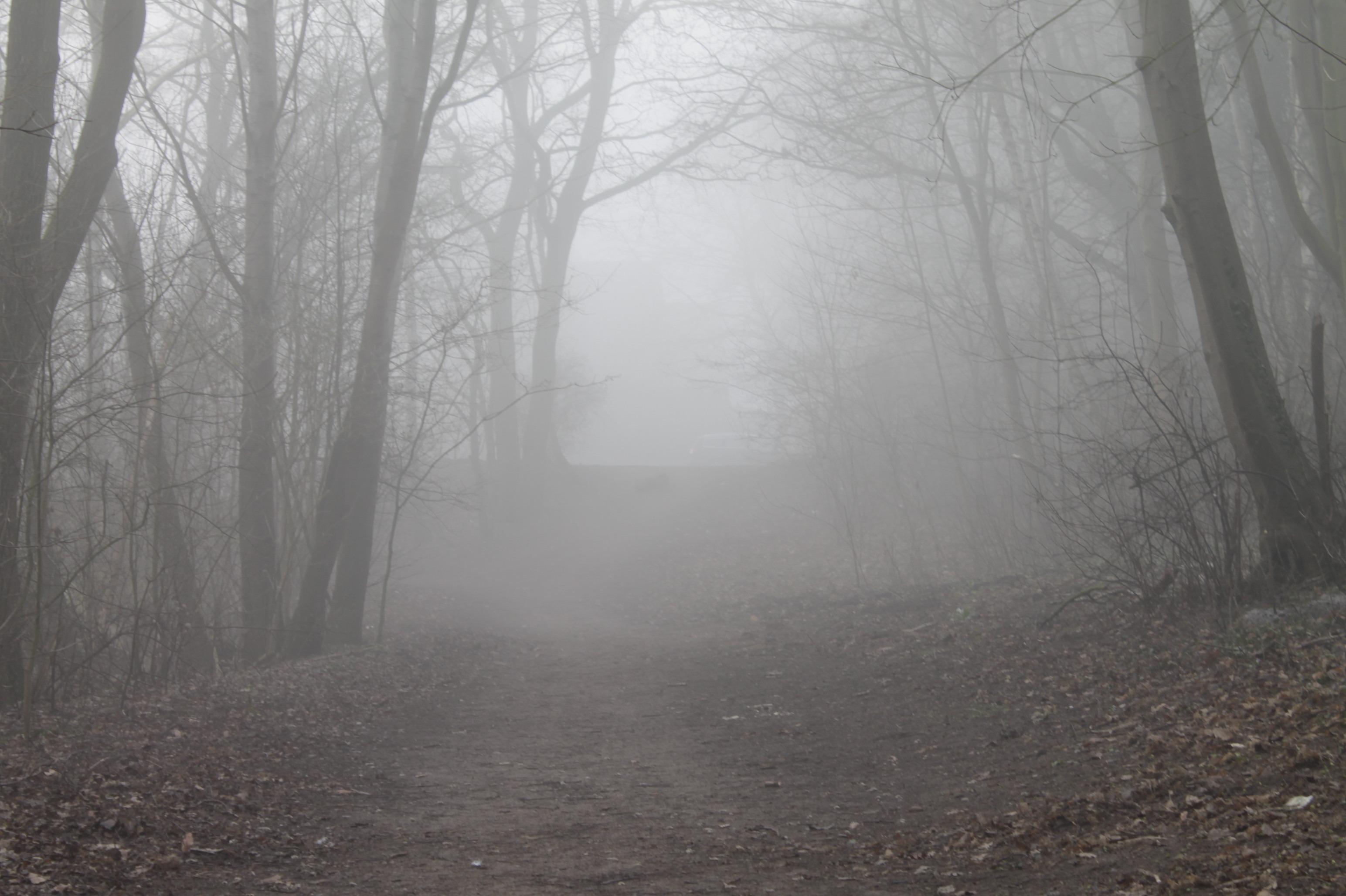 Картинки страшного тумана