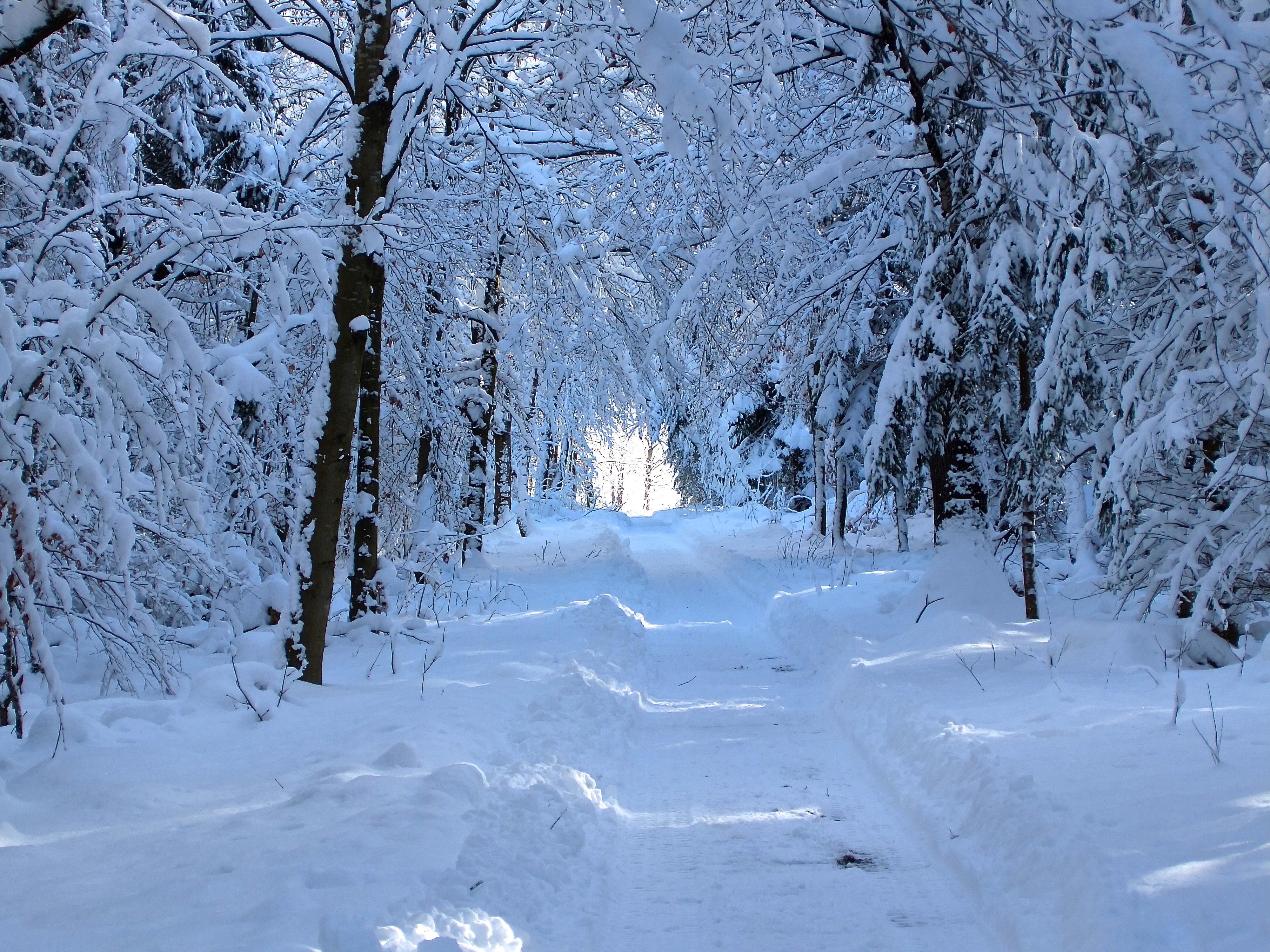 Bildet Landskap Tre Sti Frost G 229 V 230 R Snowy 229 Rstid