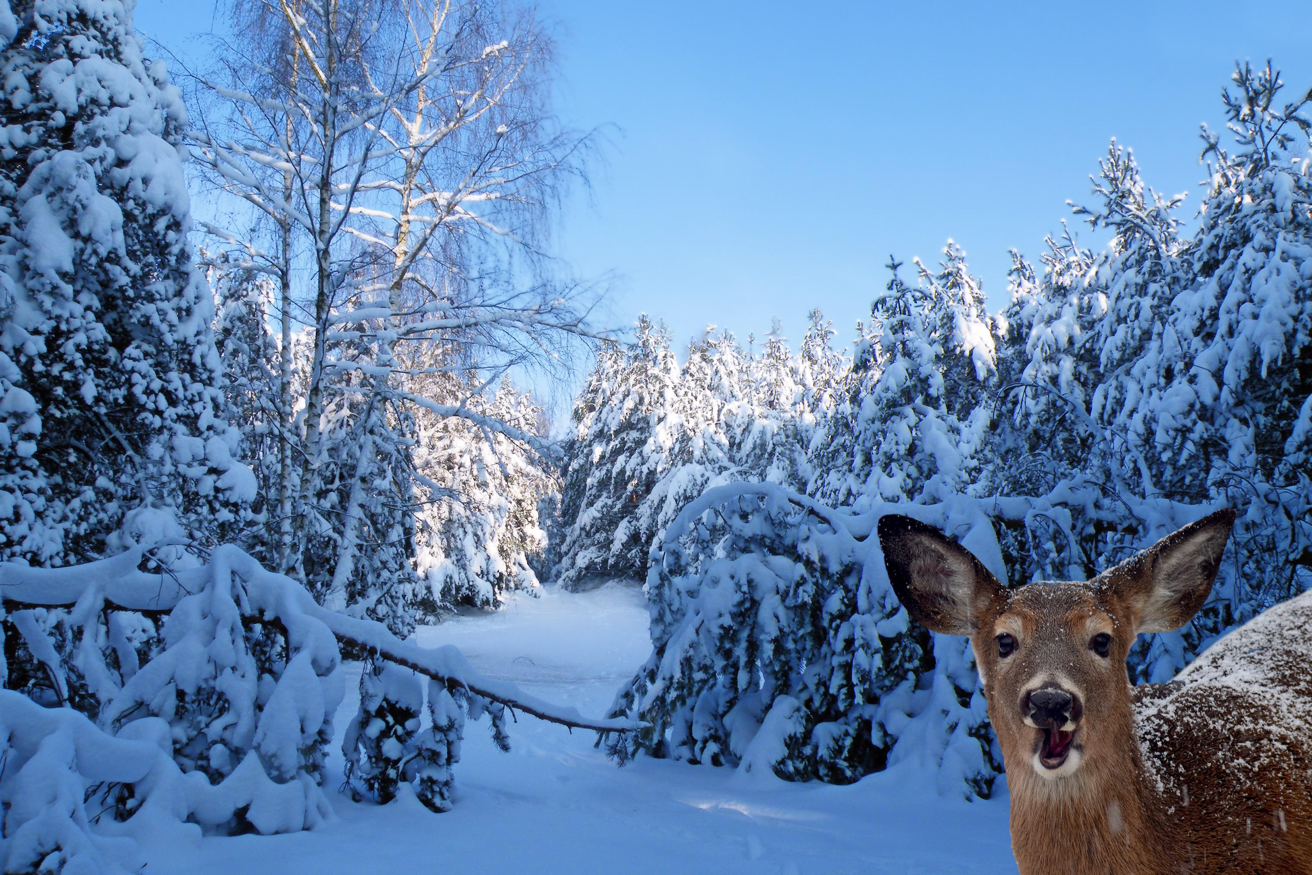 The Christmas Tree Deer Park
