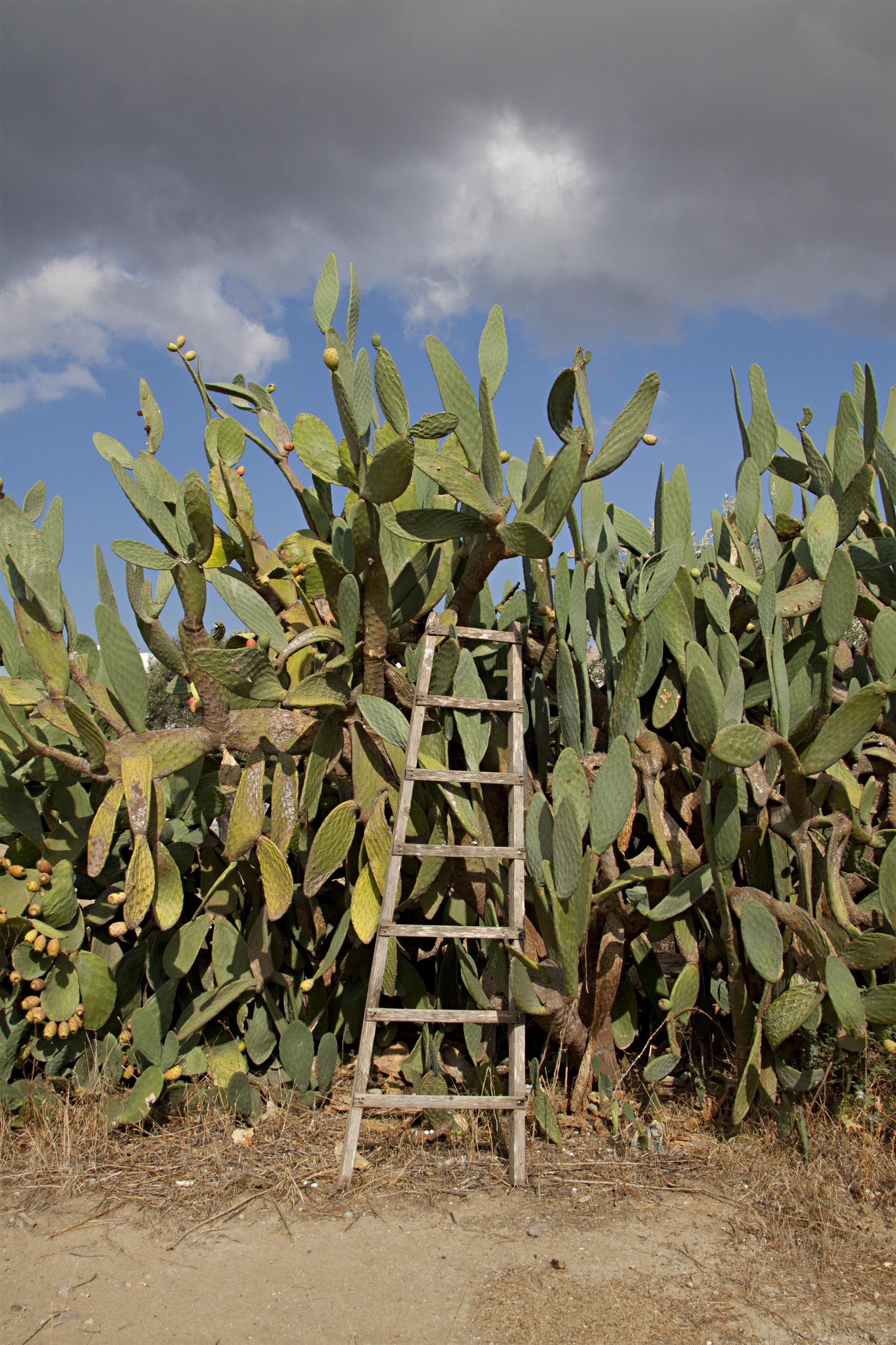 images gratuites paysage arbre herbe cactus champ chaud fleur sec aliments vert. Black Bedroom Furniture Sets. Home Design Ideas