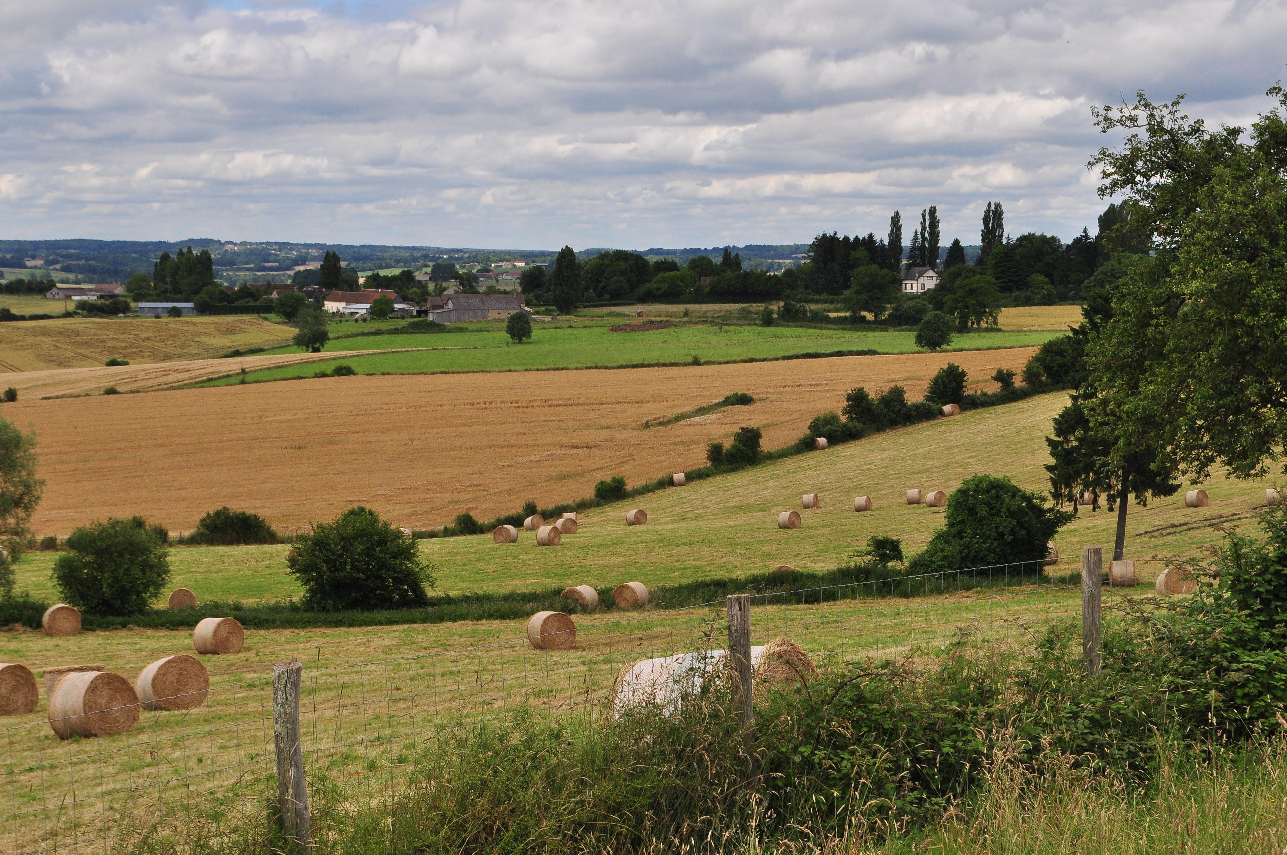 покажу, как фото камни на сельскохозяйственных полях эстонии бугорчатые корнишонные