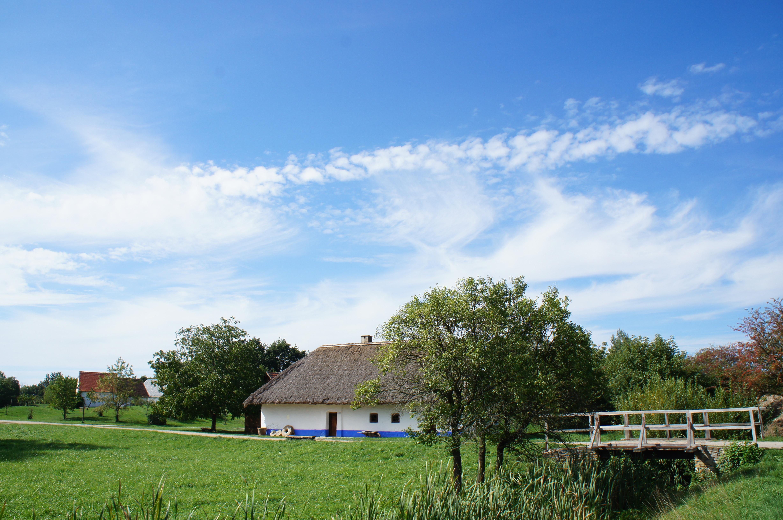 Gratis afbeeldingen landschap boom gras wolk hemel wit