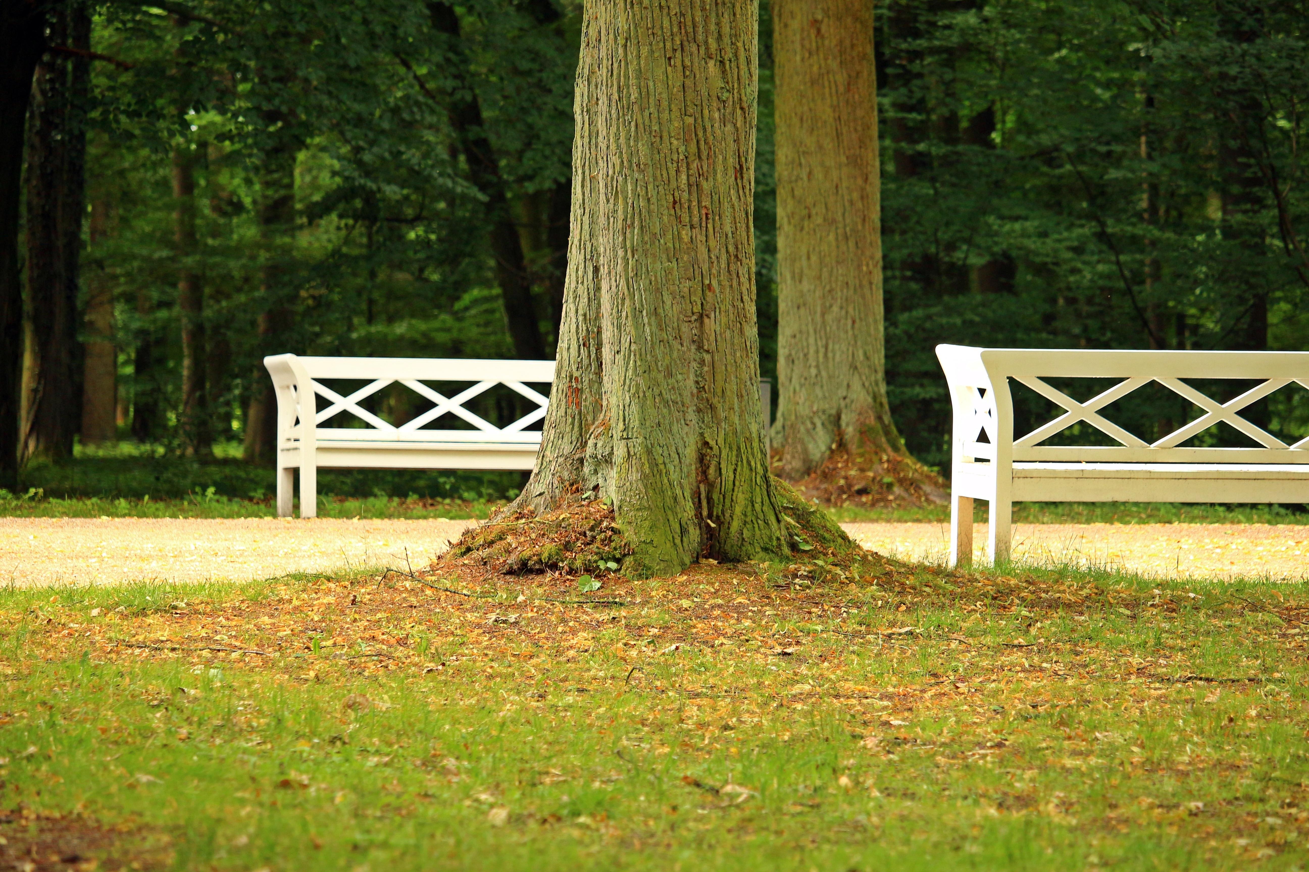 Landschaft Baum Gras Zaun Pflanze Holz Rasen Wiese Blatt Zuhause Grün Weide  Herbst Park Hinterhof Garten