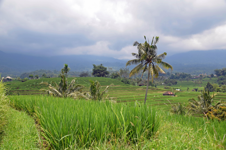 Gambar : pemandangan, pohon, gunung, bidang, padang rumput ...