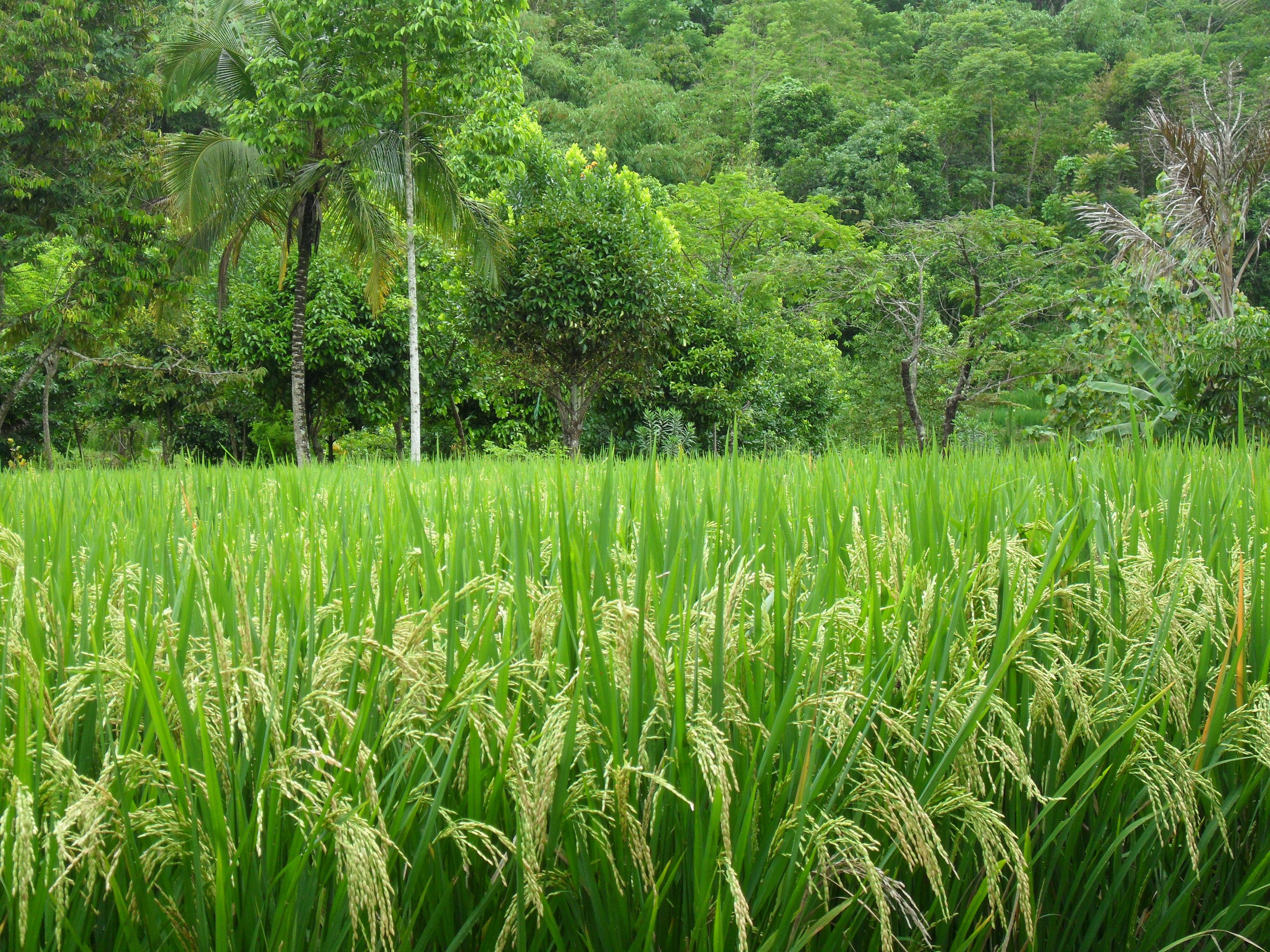 Gratis billeder landskab tr gr s plante mark gr n for Plante jungle