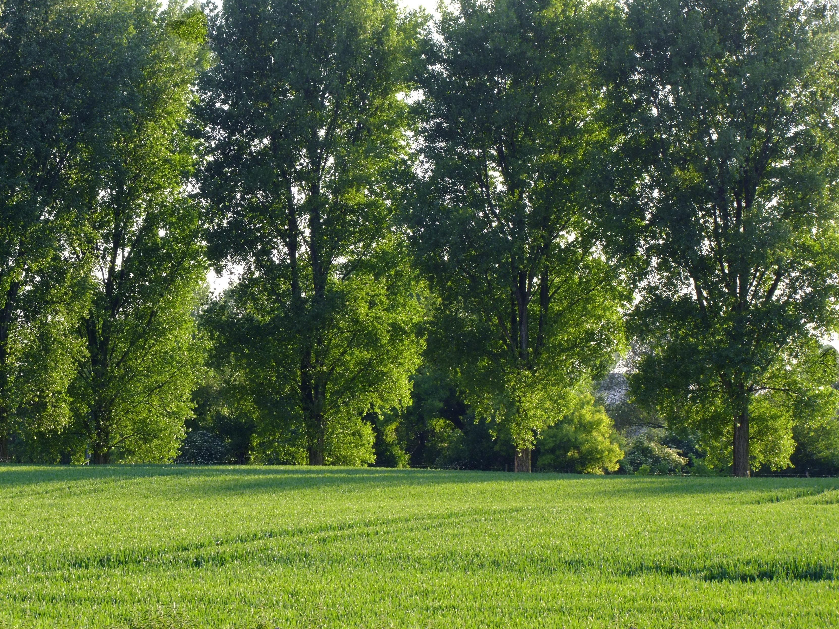 trees germany grass - photo #5
