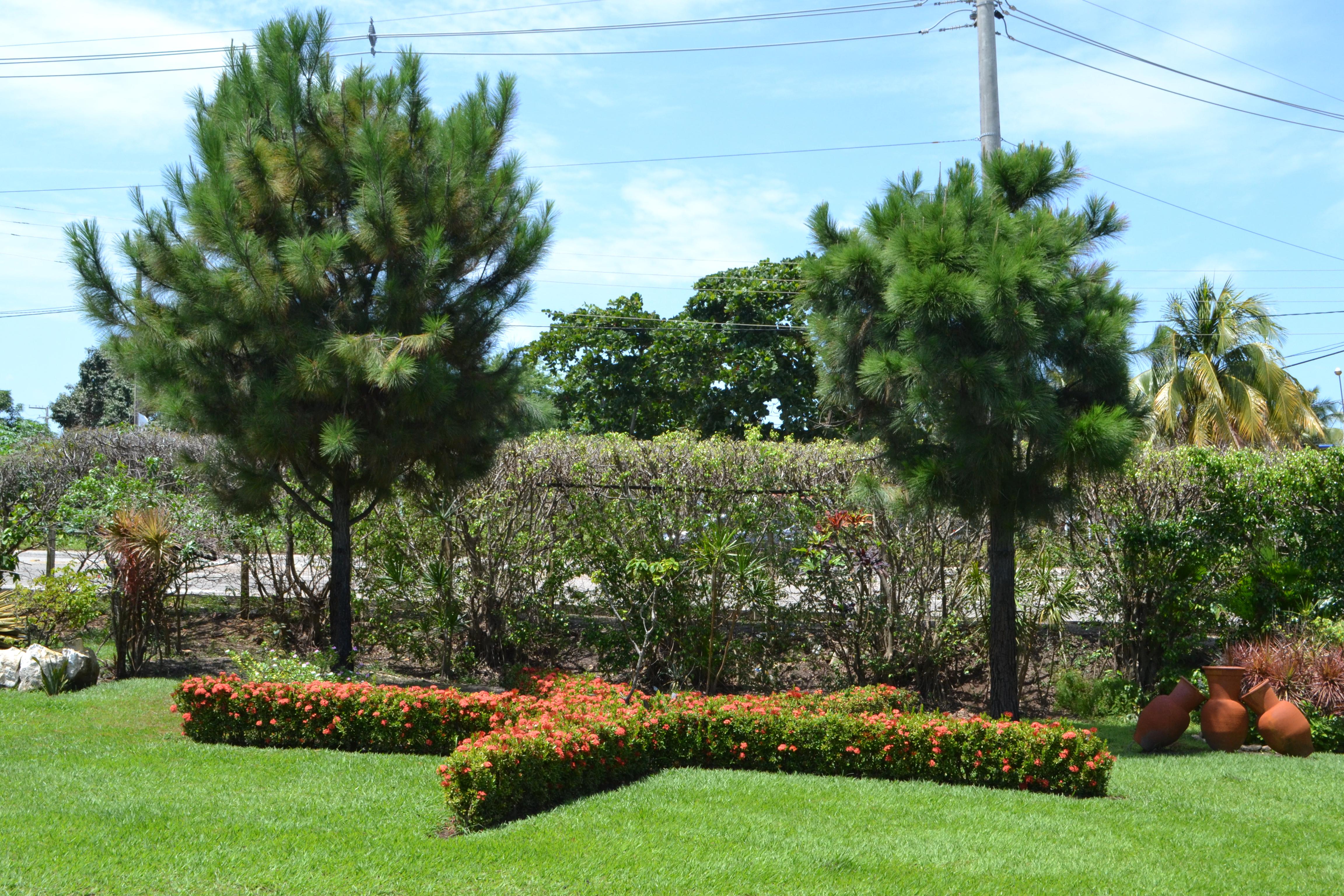 Alberi sempreverdi per giardino - Alberi ornamentali per giardino ...