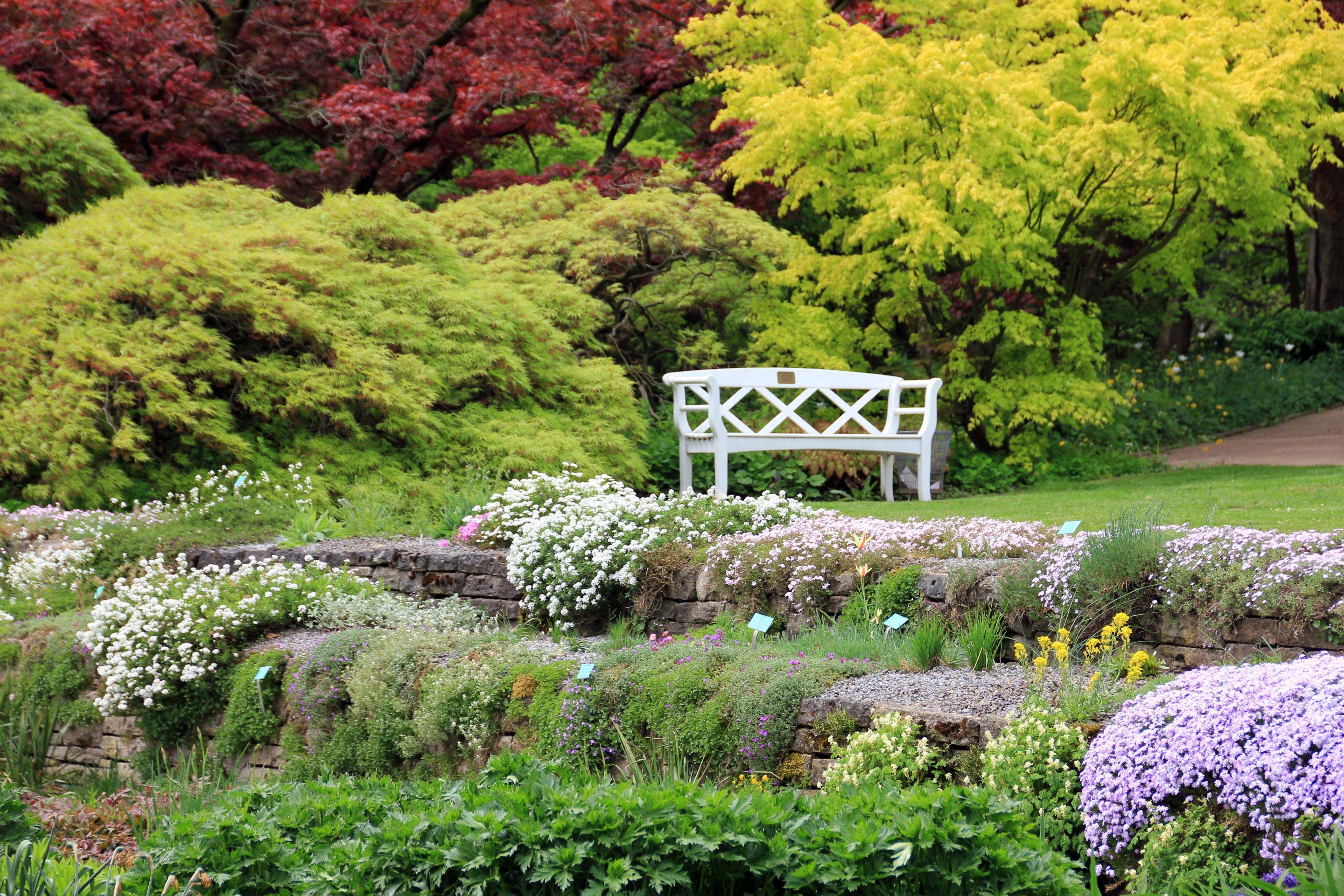 Images gratuites paysage arbre herbe plante pelouse for Paysage de jardin
