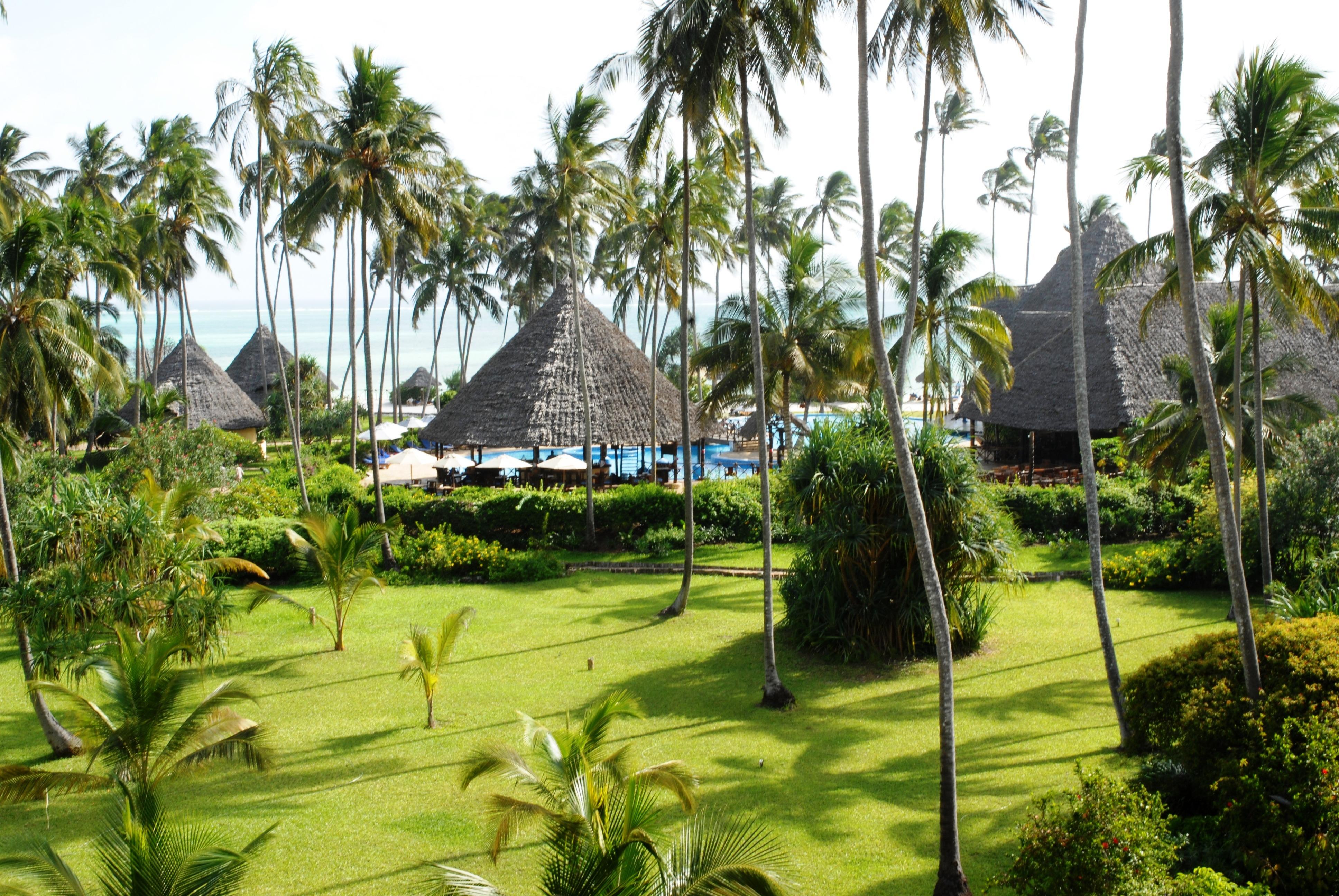 Gratuites paysage arbre herbe plante palmier